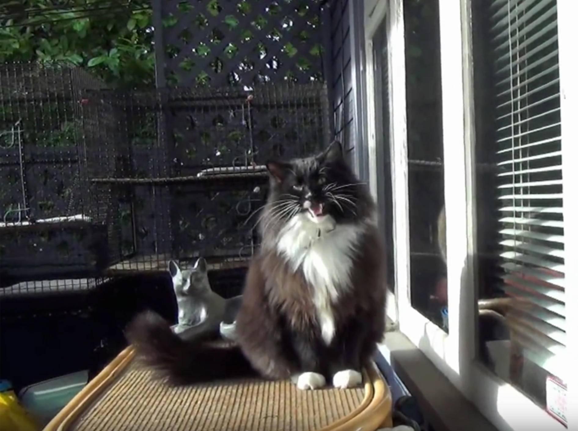 Flauschkater Freddy Mercury singt ein Katzenlied – YouTube / The Kits Cats