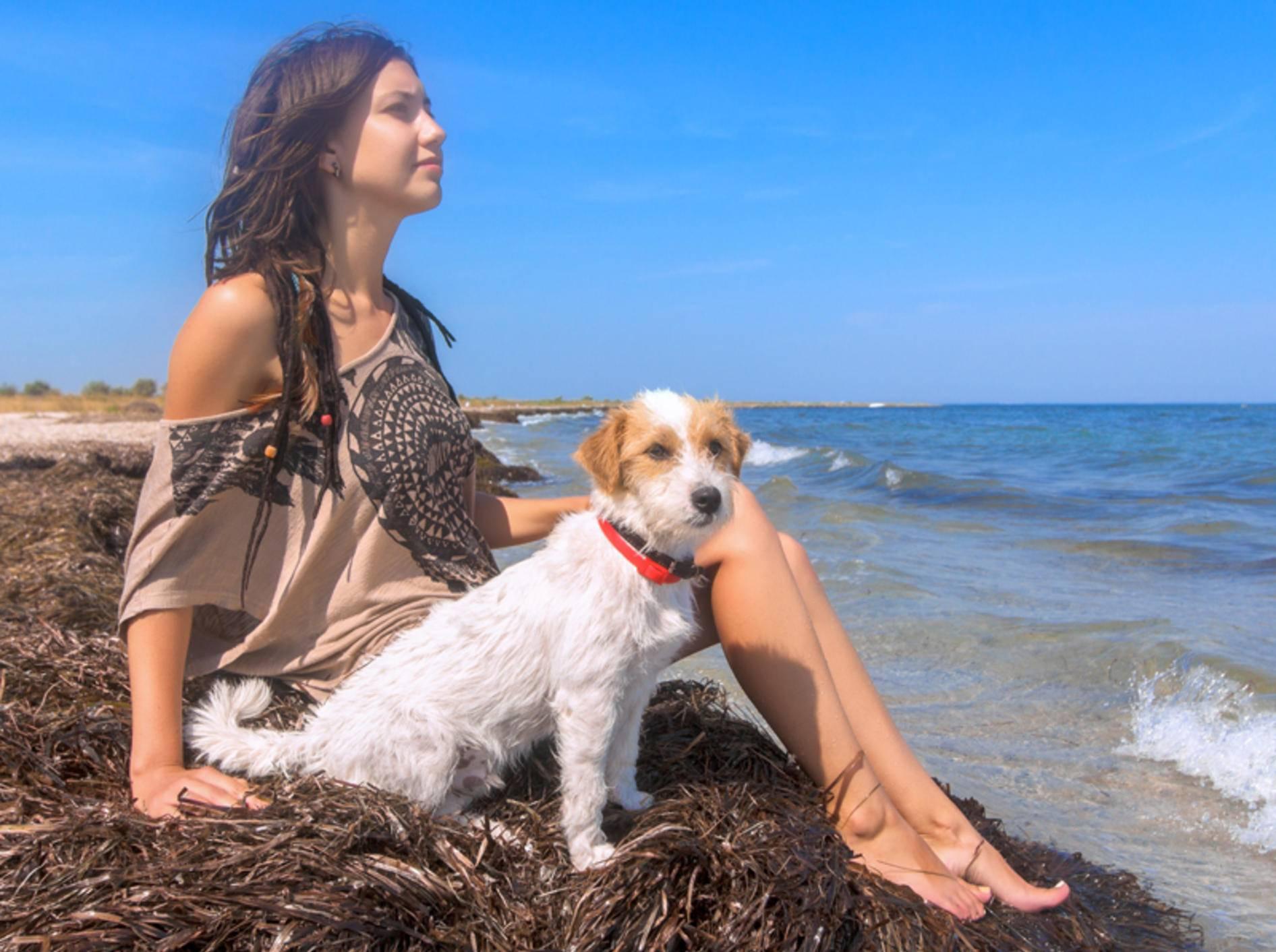Wellness mit Hund am Strand, da ist Entspannung garantiert – Shutterstock / Sundays Photography