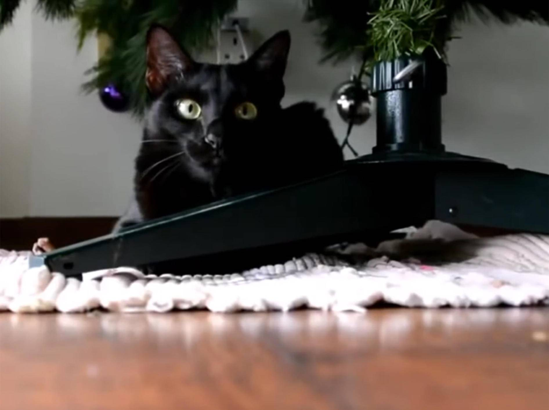 Katzen vs. Weihnachtsbaum: Attackeee! – YouTube / Animalz TV