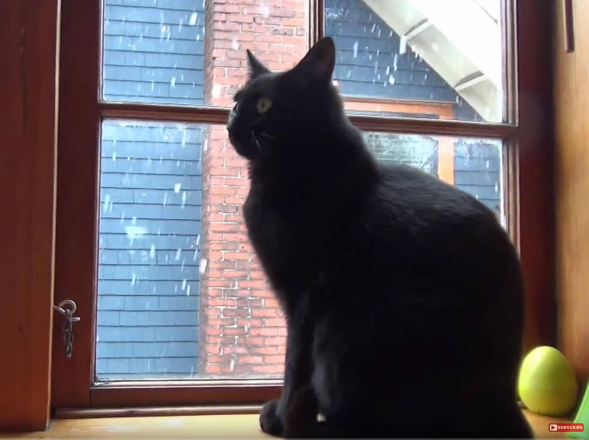 Cupcake, Roodi, Kami und Co.: Katzen feiern Weihnachten – YouTube / The Kits Cats