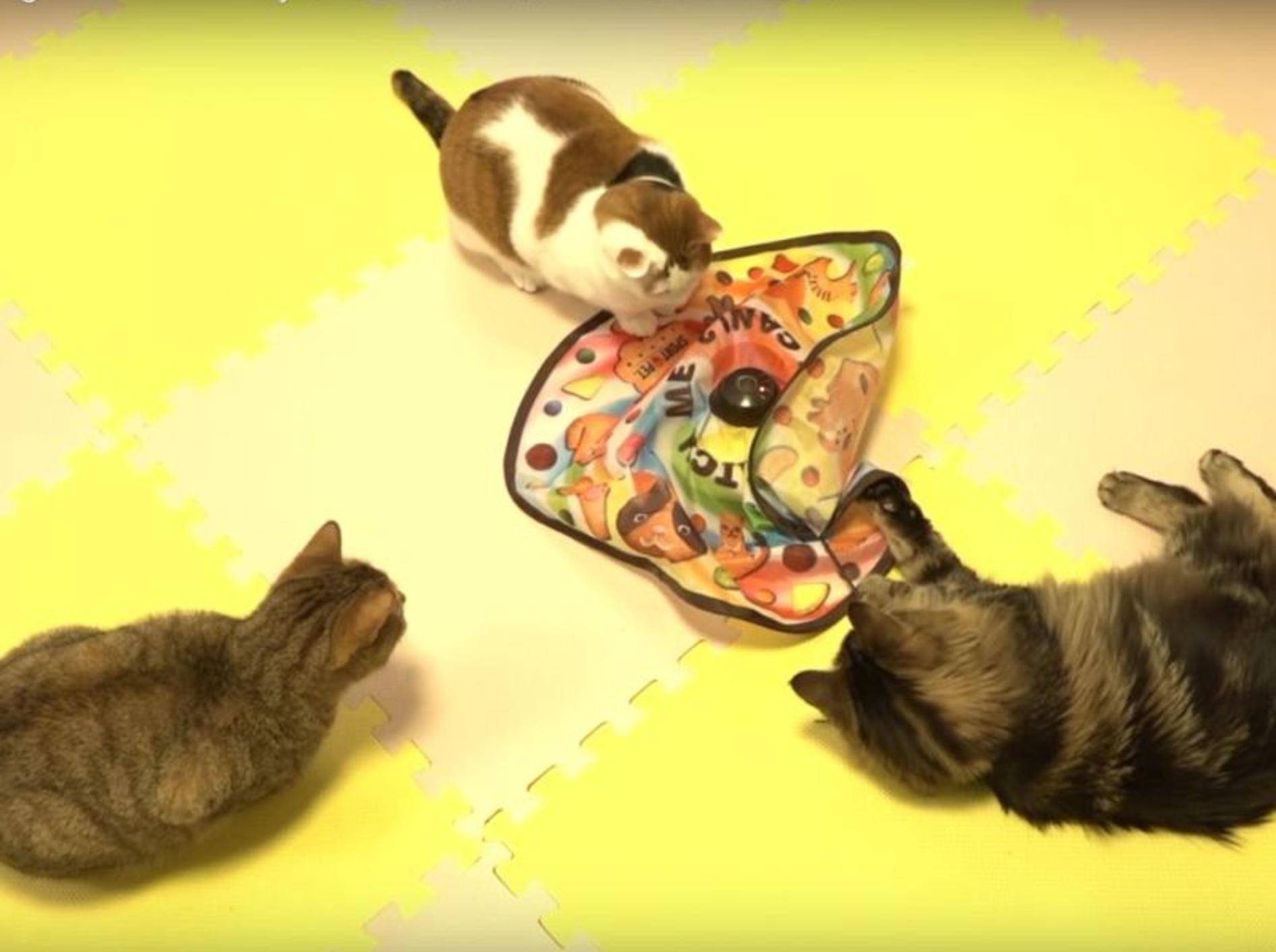 Zehn Katzen haben Spaß mit neuem Spielzeug – YouTube / 10 Cats.