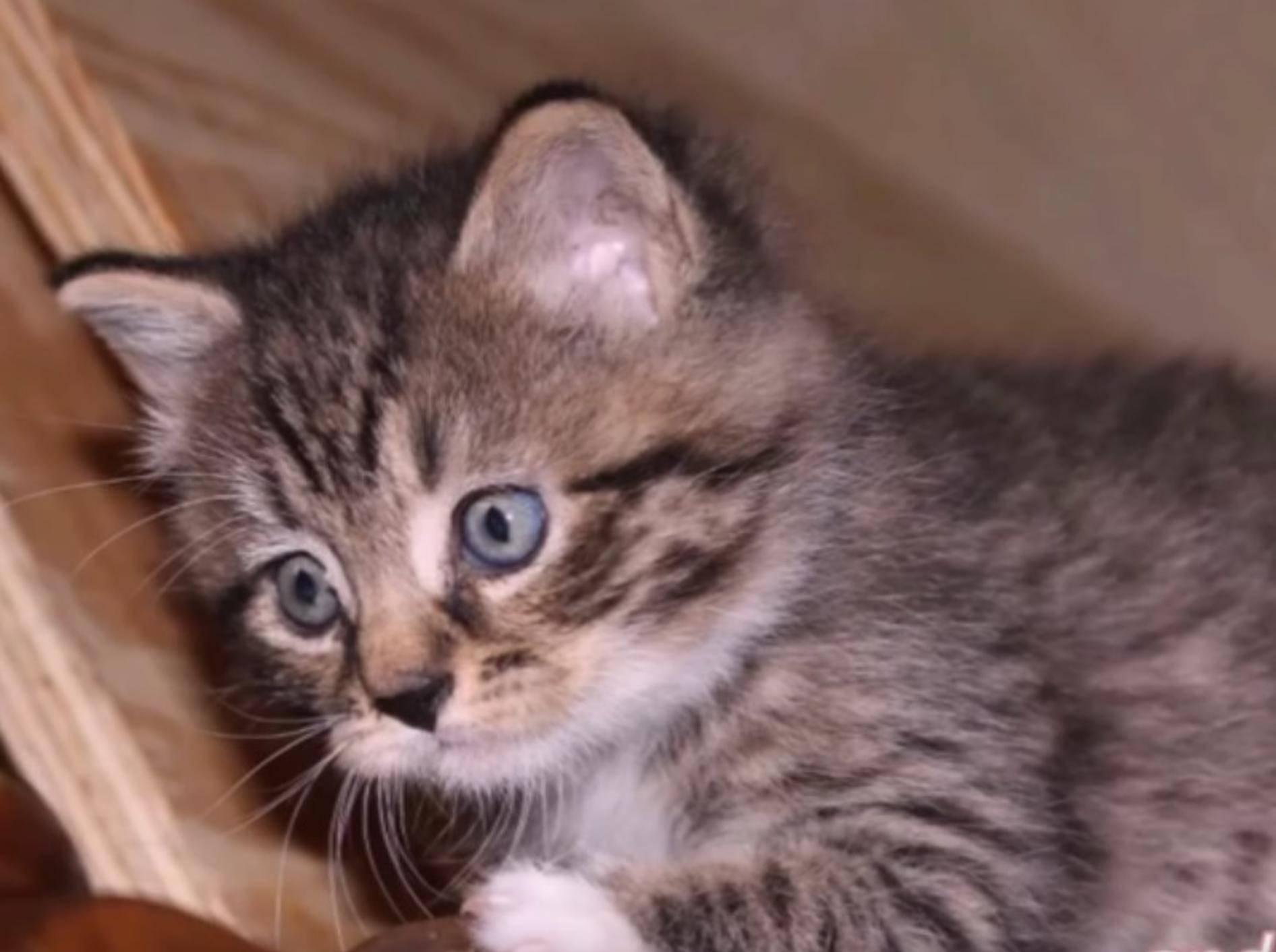 So viel Glück – Kitten Leonard konnte gerettet werden – YouTube / Joshua Gold