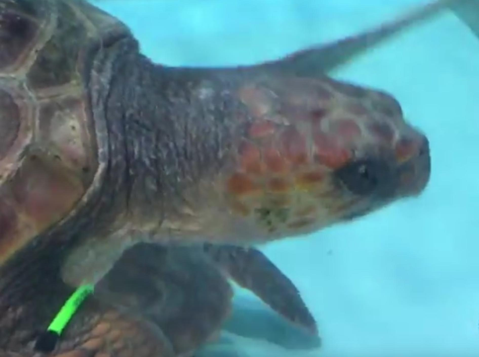 Gerettet, dank einer Neufundländerin – YouTube / New England Aquarium