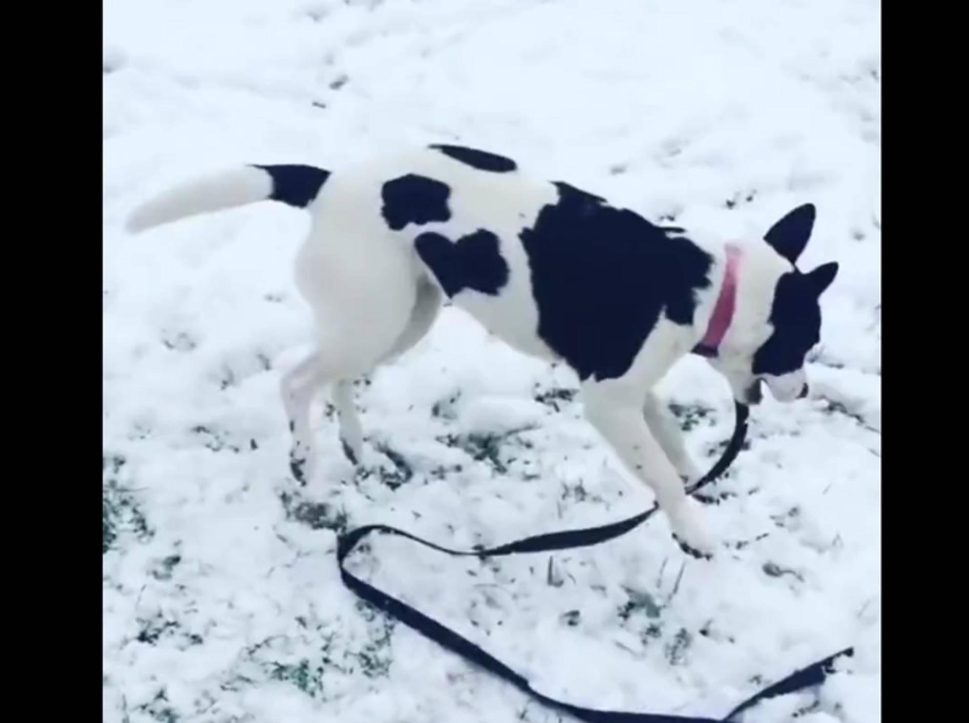 Süßer Hund hopst fröhlich durch den Schnee – YouTube / Rumble Viral
