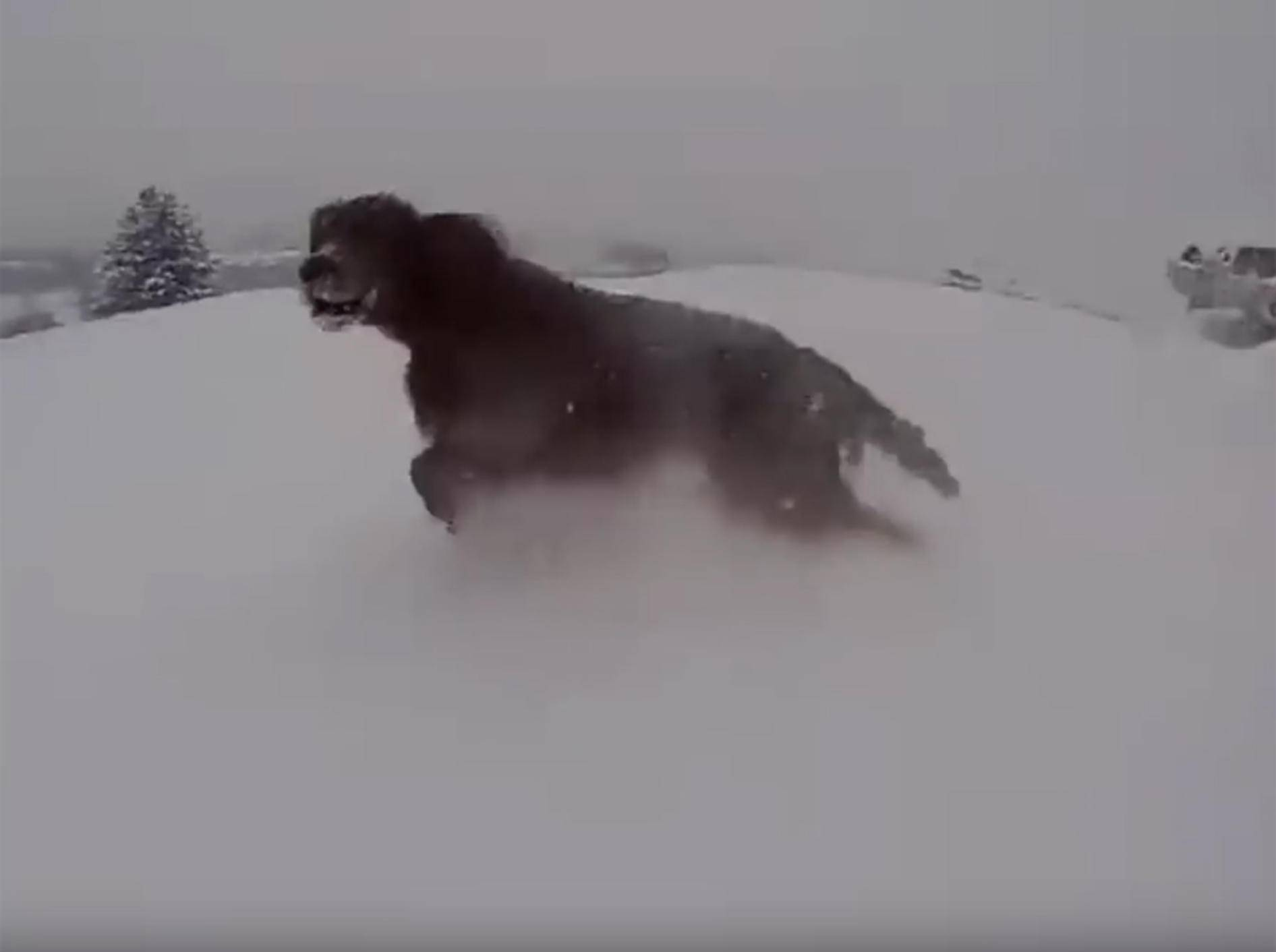 Juhuuu! Badi, der Hund, tanzt im Schnee – YouTube / Rumble Viral