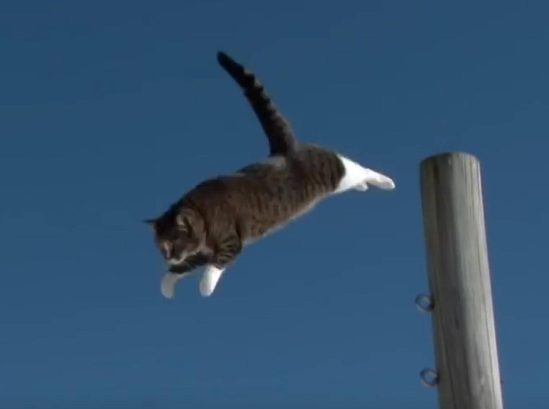 Katze Didga ist ein richtiger Parkour-Profi! – YouTube / CATMANTOO