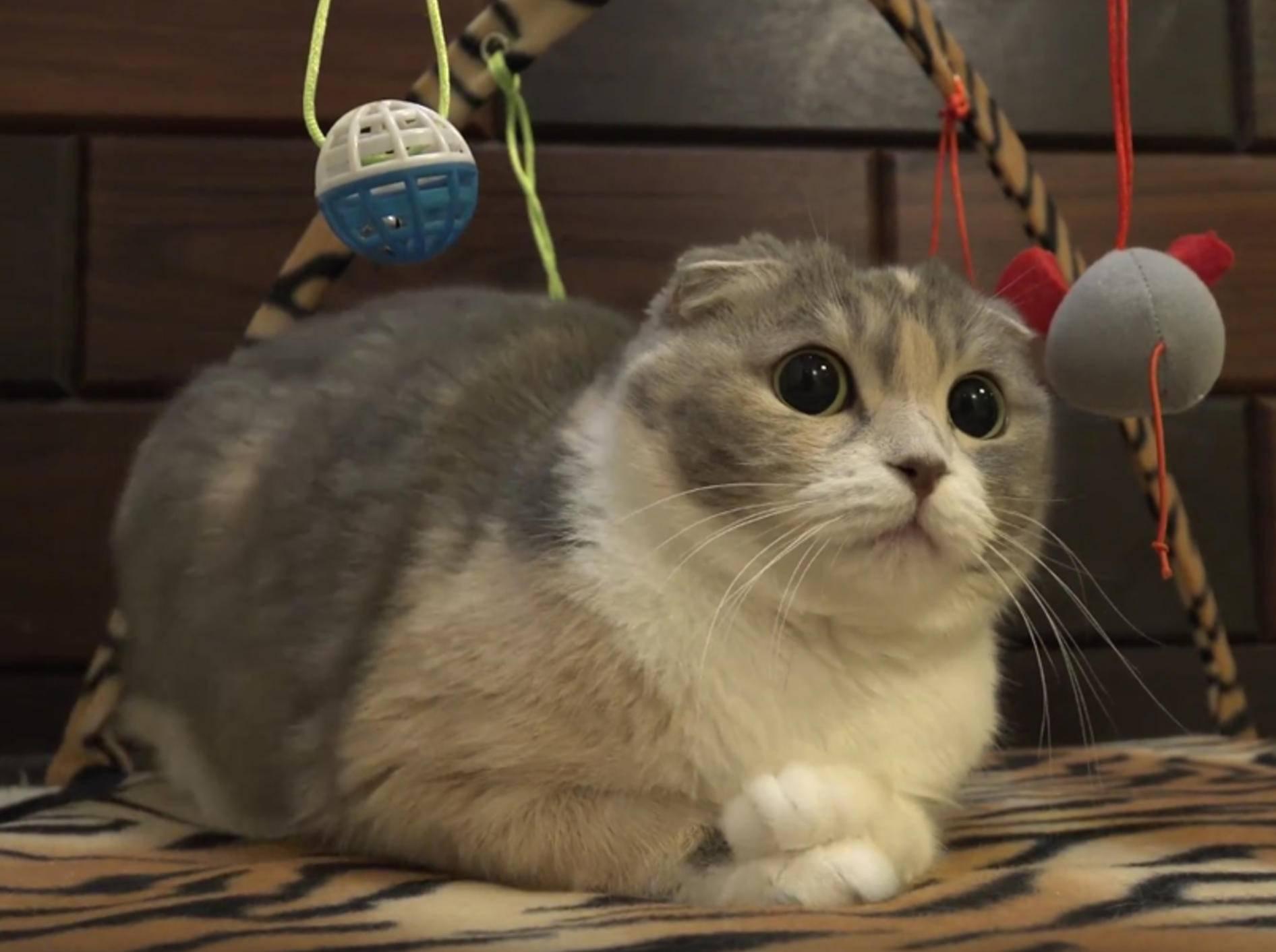 Katze Mu hat Hummeln im Hintern – YouTube / 10 Cats