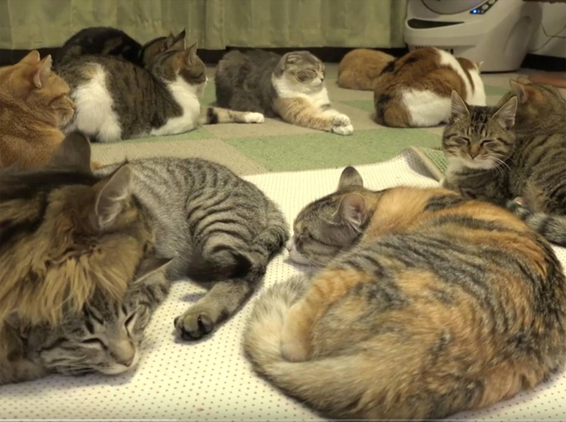 14 Katzen machen ein kuschelig-warmes Nickerchen – YouTube / 10 Cats.