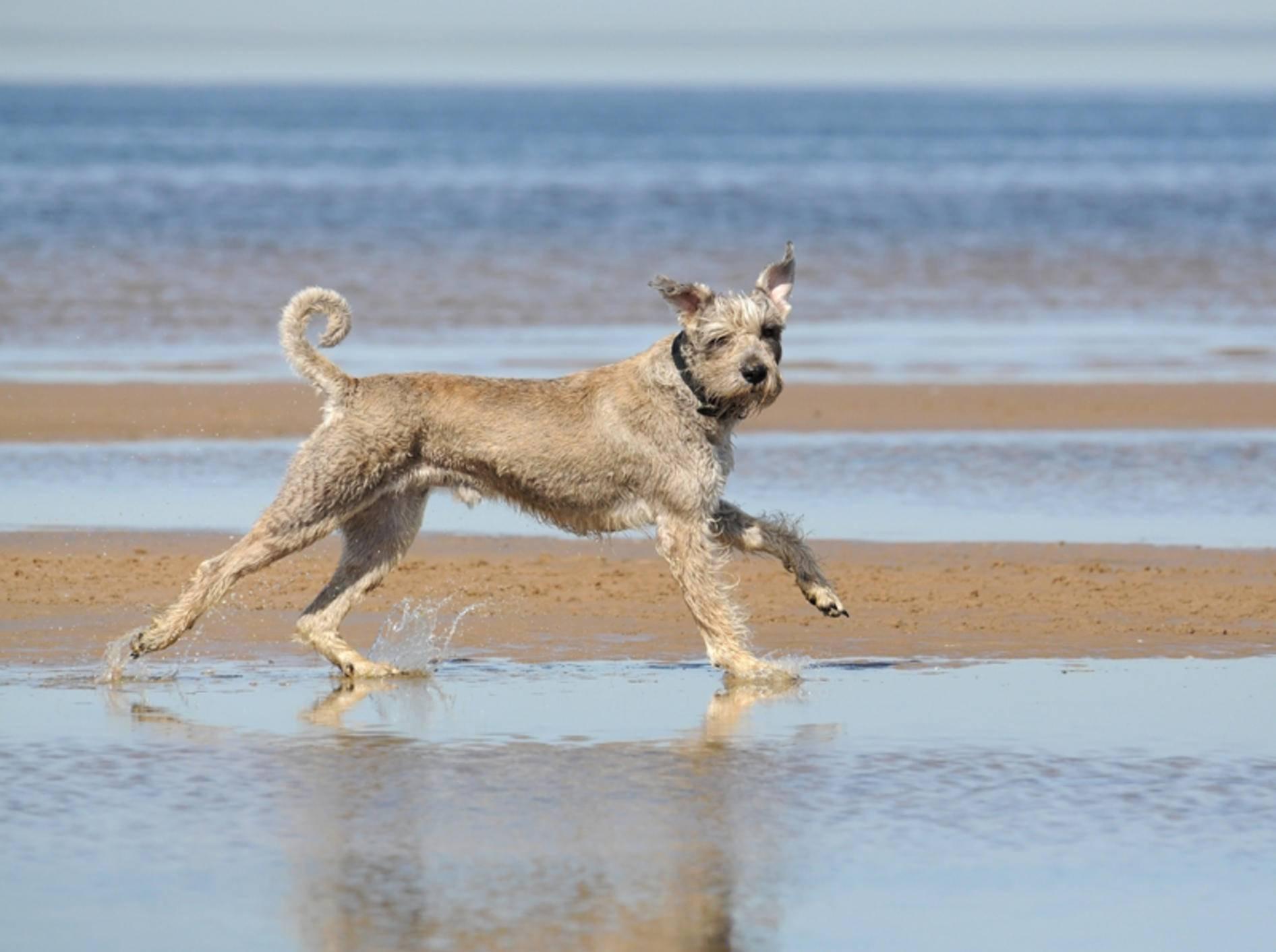 Dieser Hund hat richtig Spaß beim Strandurlaub – Shutterstock / Elena Liubiteleva