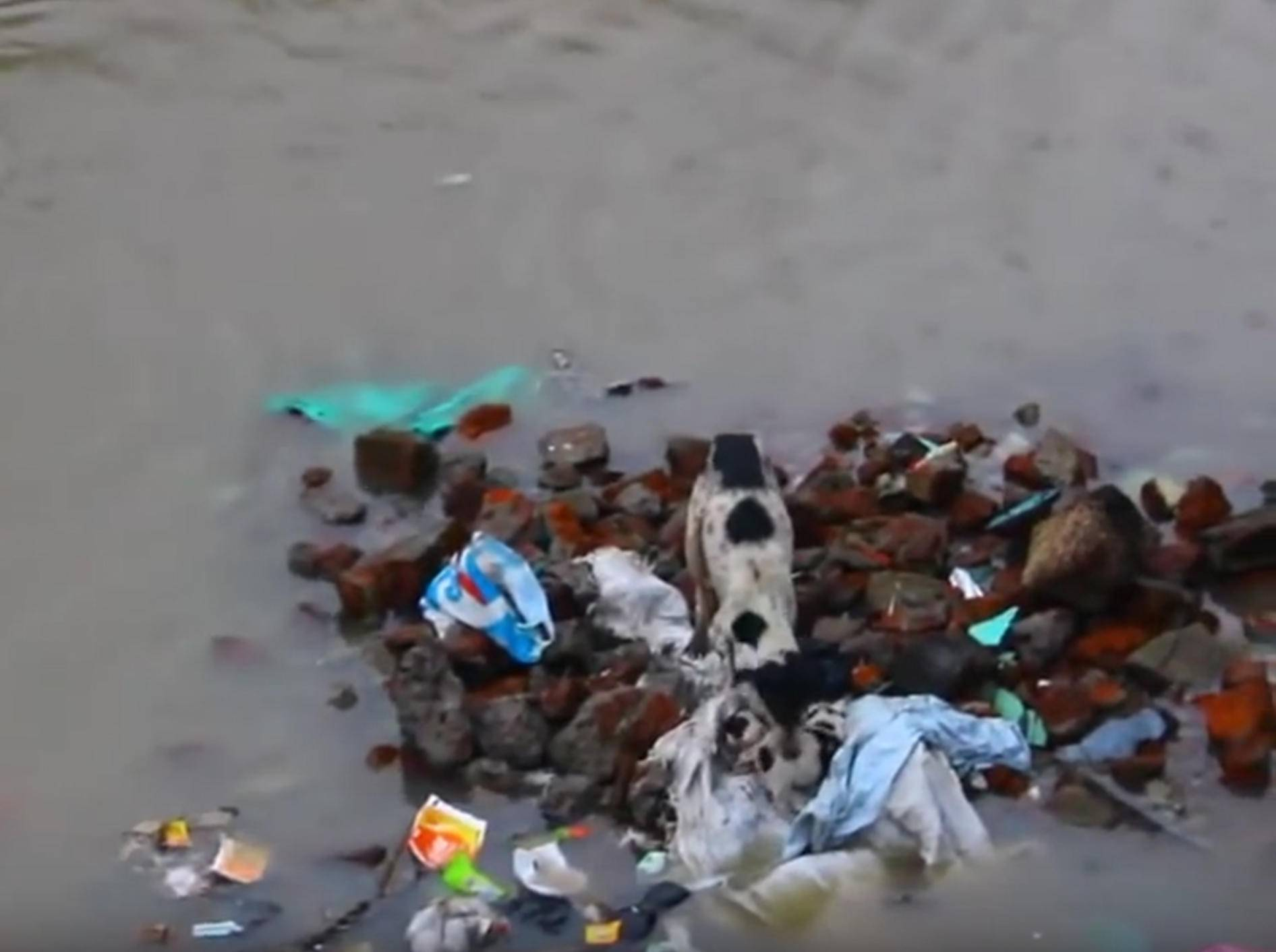 Hundemama rettet ihre Babys nach Überflutung – YouTube / Amazing Video's