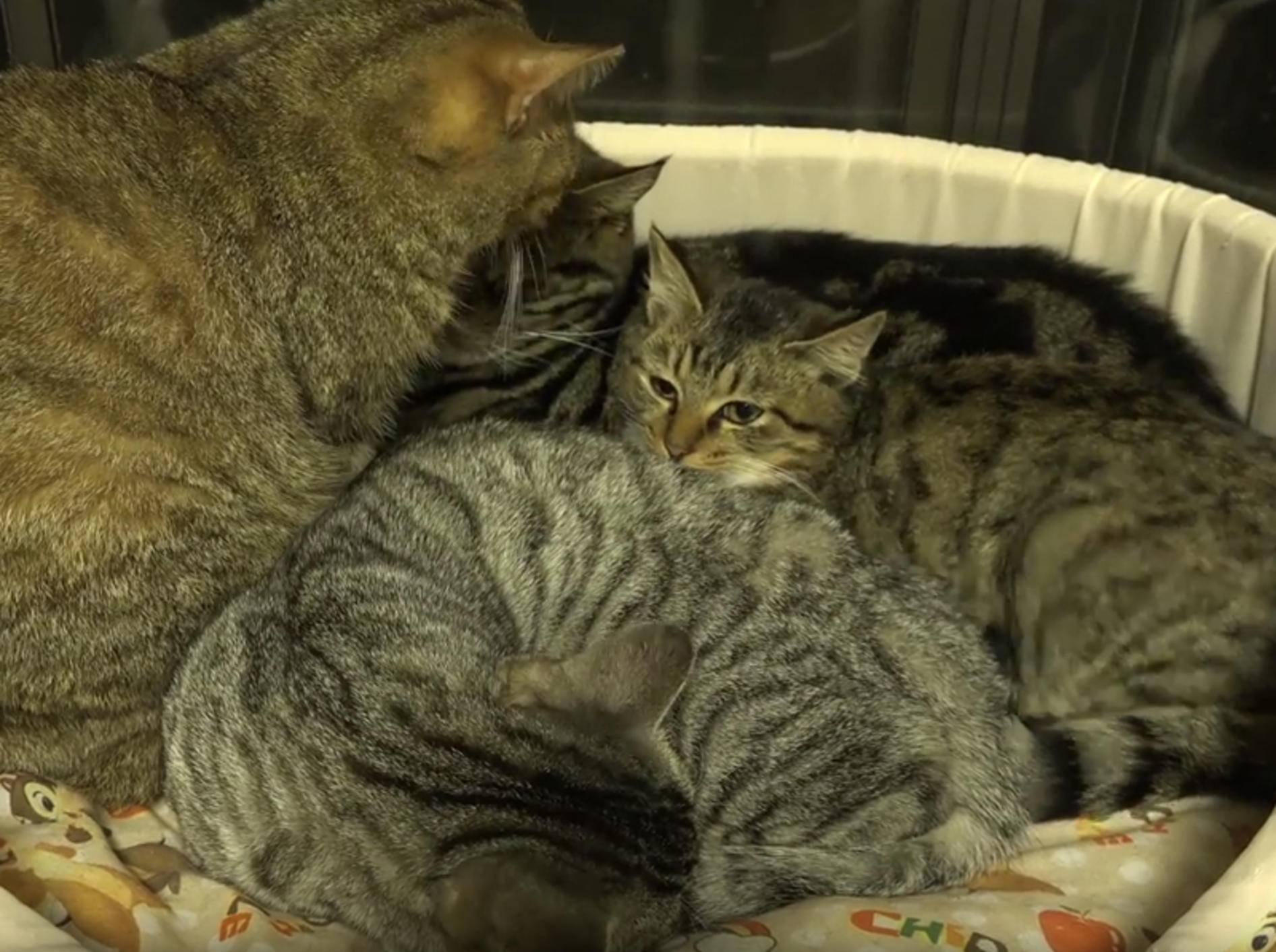 Liebe Katzen putzen und bekuscheln Pflegemiezis – YouTube / 10 Cats.