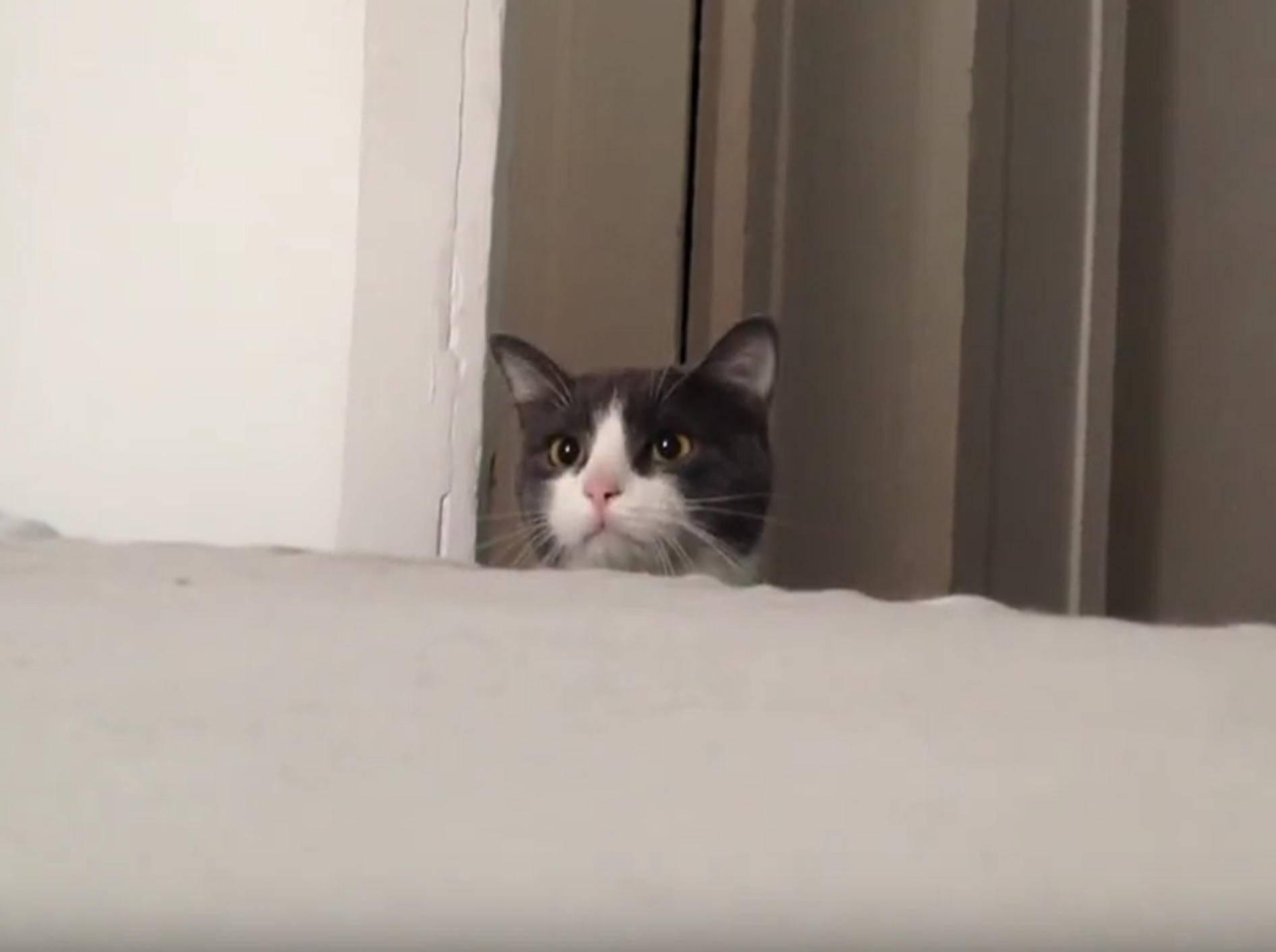 Lustige Katze hält sich für Superspion – YouTube / Suphalak Phutpheng