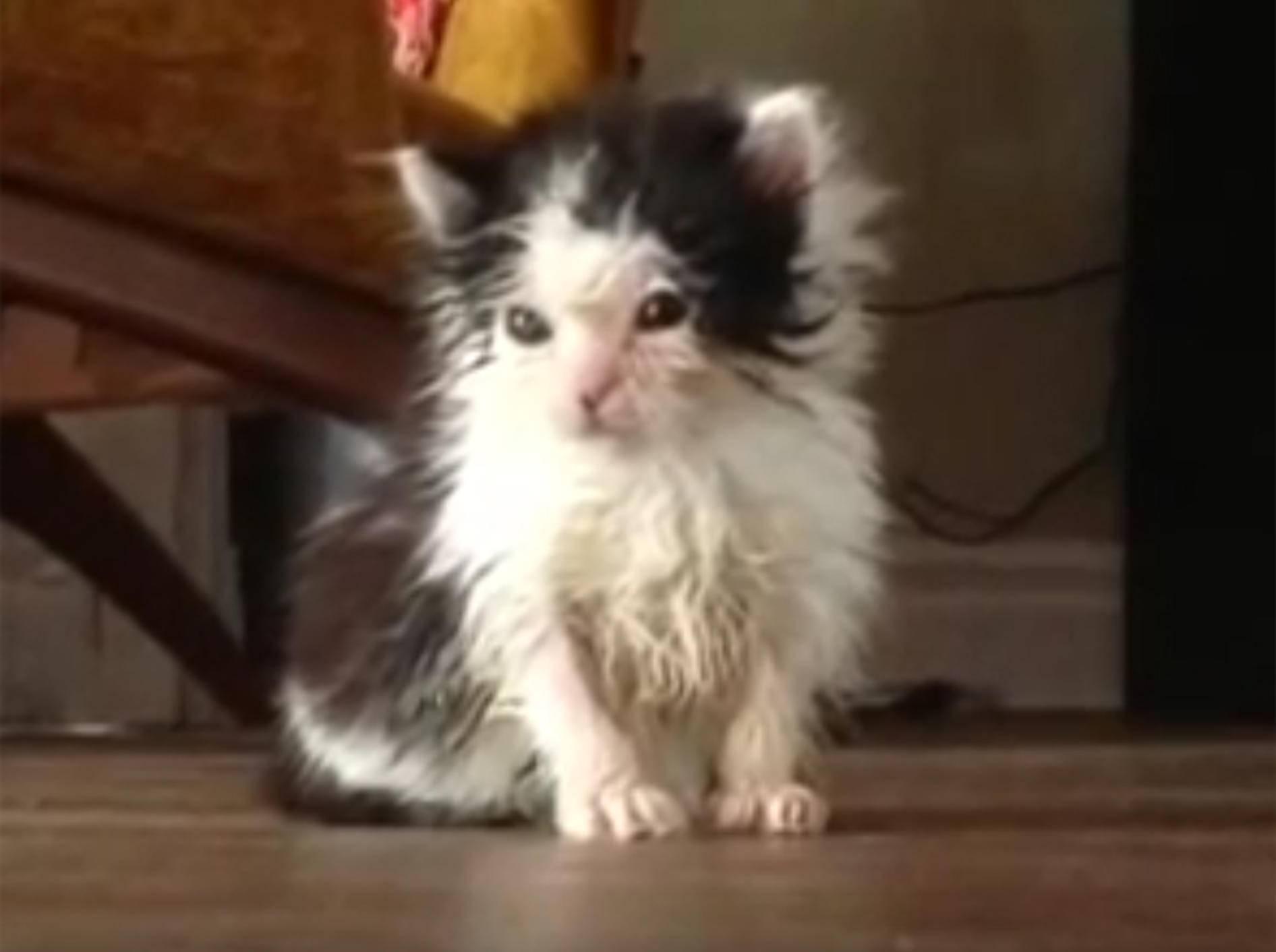 Oreo: Ein Findelkätzchen wird erwachsen – YouTube / Oreo The Cat