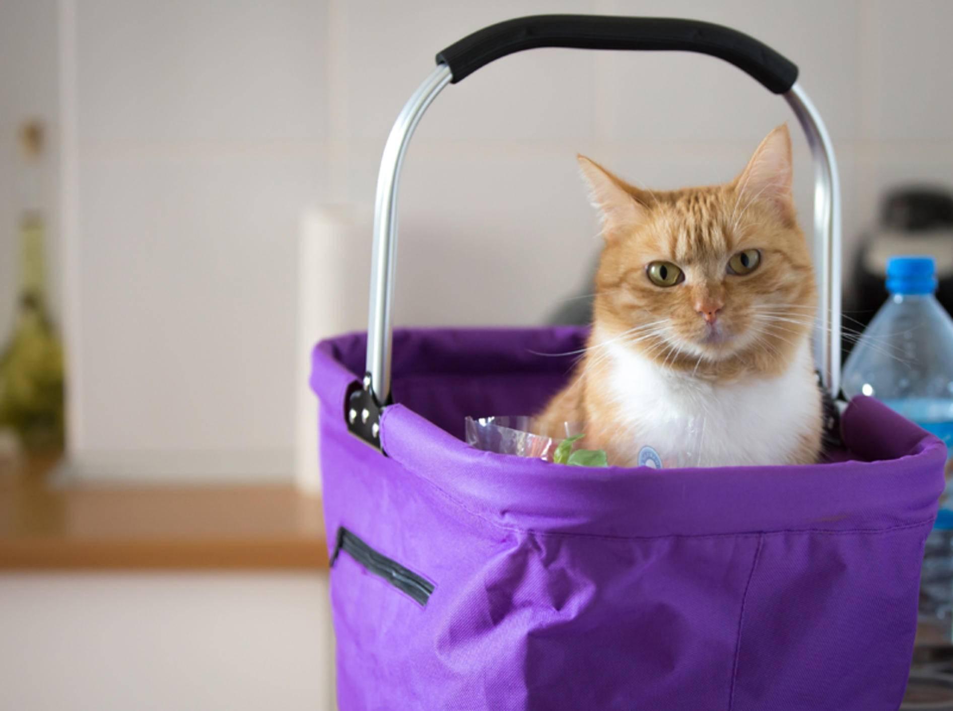 """""""Keine Leckerlis für mich in der Einkaufstasche? Ich bin empört!"""", scheint diese freche Katze zu denken – Shutterstock / Catwalk Photos"""