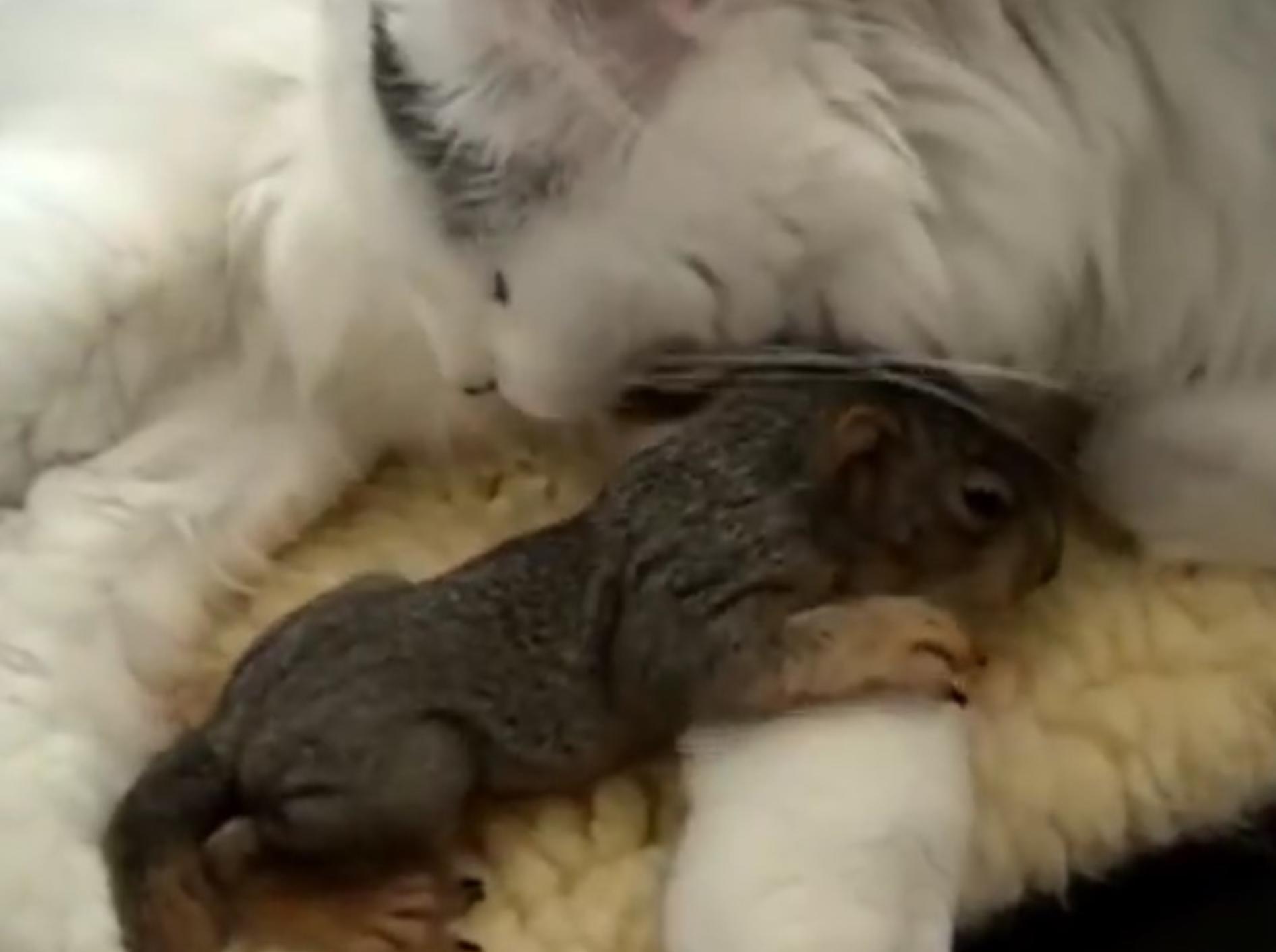 Die Katze hat das Eichhörnchen-Baby wirklich lieb – YouTube / Mary Cummins