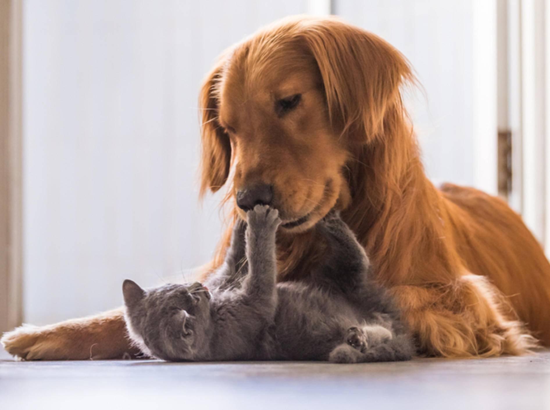 Hund und Katze, ein Unterschied wie Tag und Nacht? – shutterstock / Chendongshan