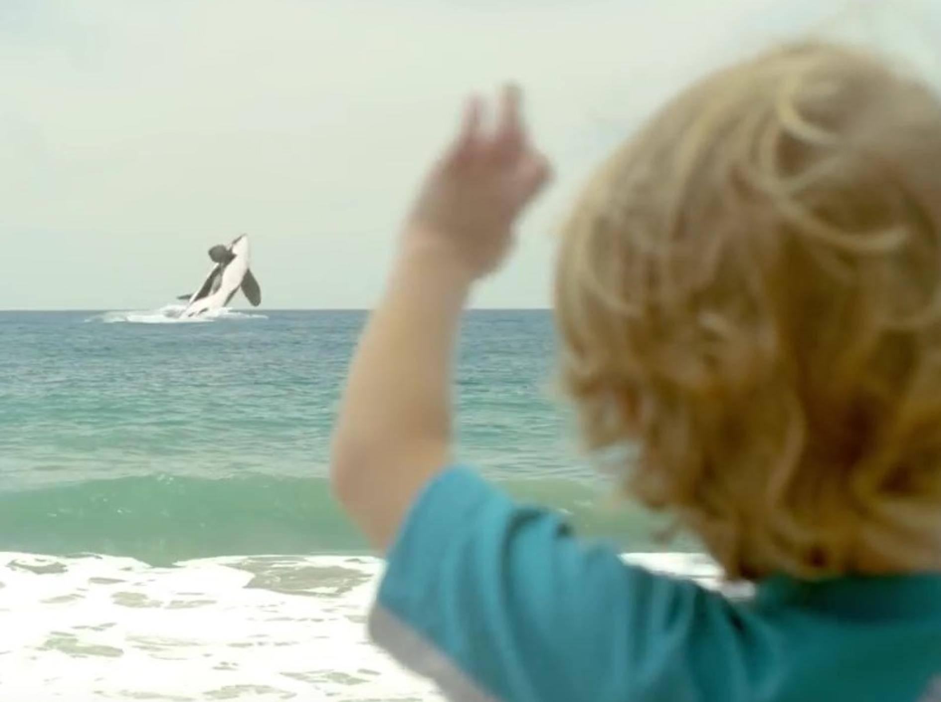 Am Ende kommt der Mini-Orca in die offene See und ist glücklich – YouTube / munchkin