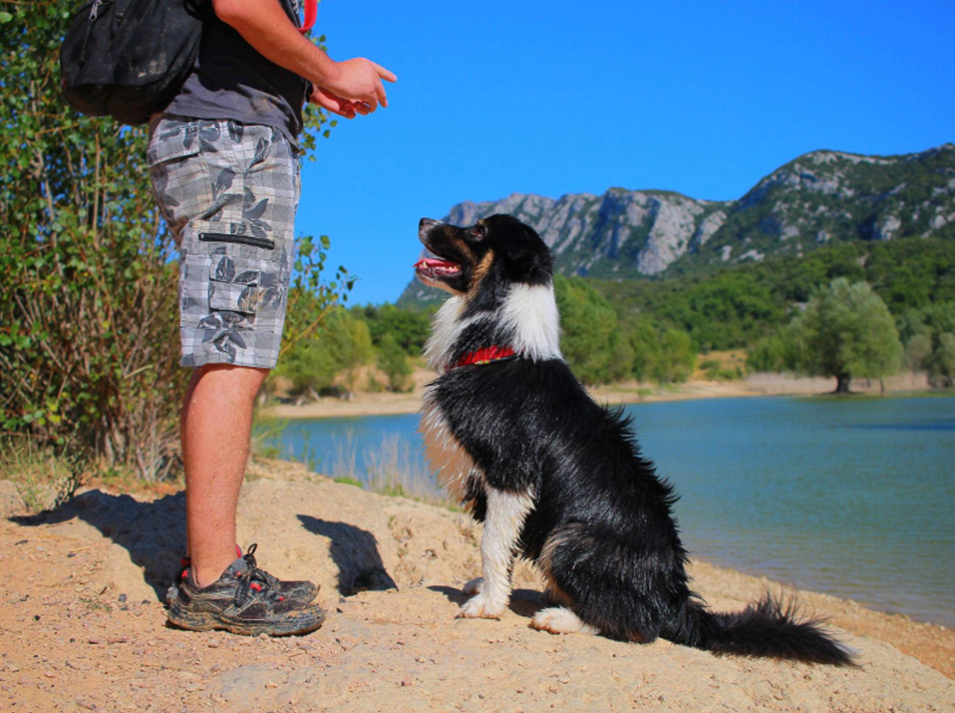 Am besten ist es, wenn der Hund dem Mensch aus freien Stücken folgt – Shutterstock / Melounix
