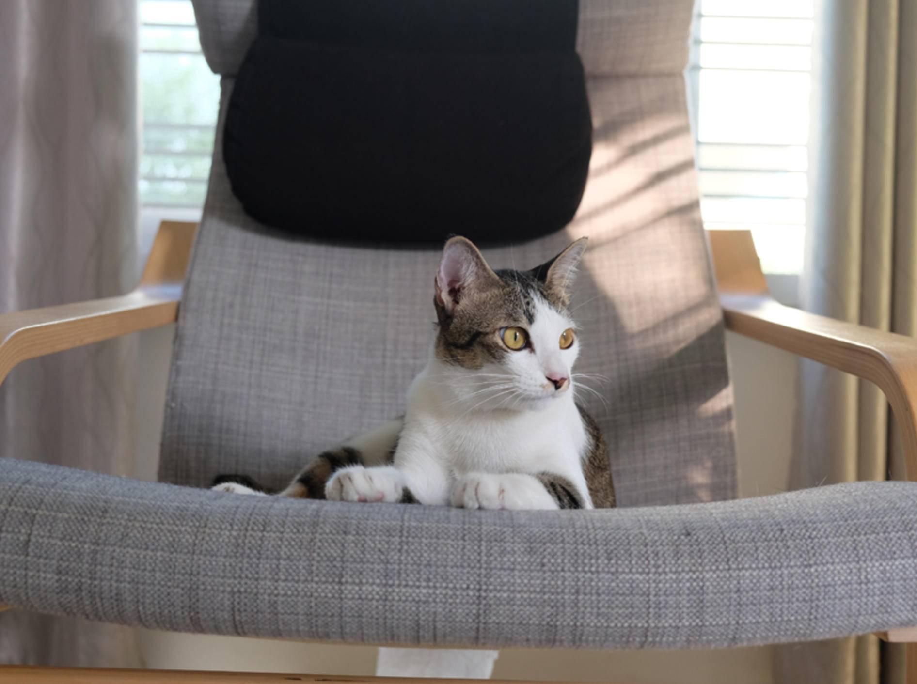 """""""Weggegangen, Platz vergangen!"""", scheint diese freche Katze zu denken – Shutterstock / thitirat_chaaim"""