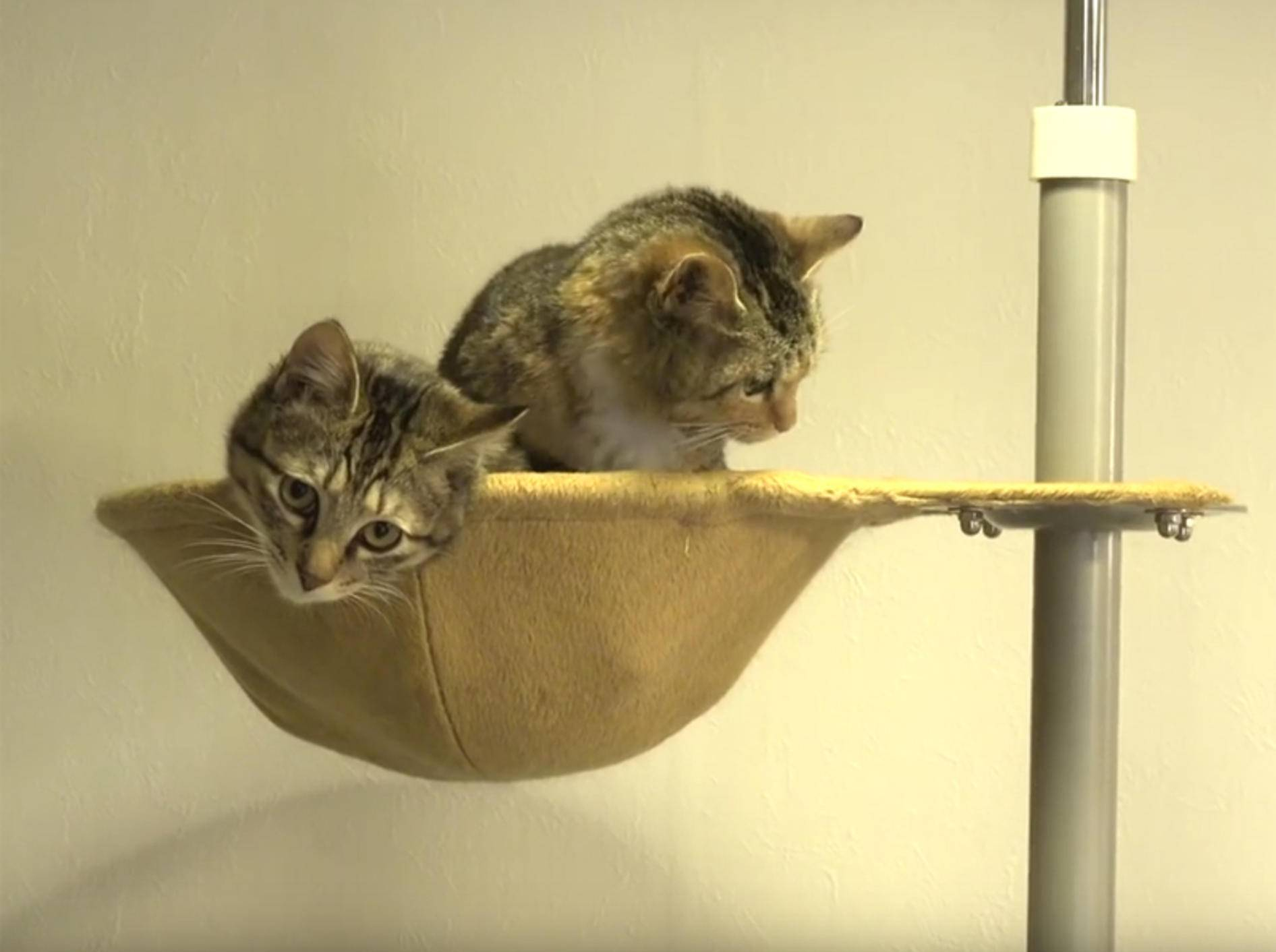Ehemalige Streunerkätzchen kuscheln zusammen – YouTube / 10 Cats