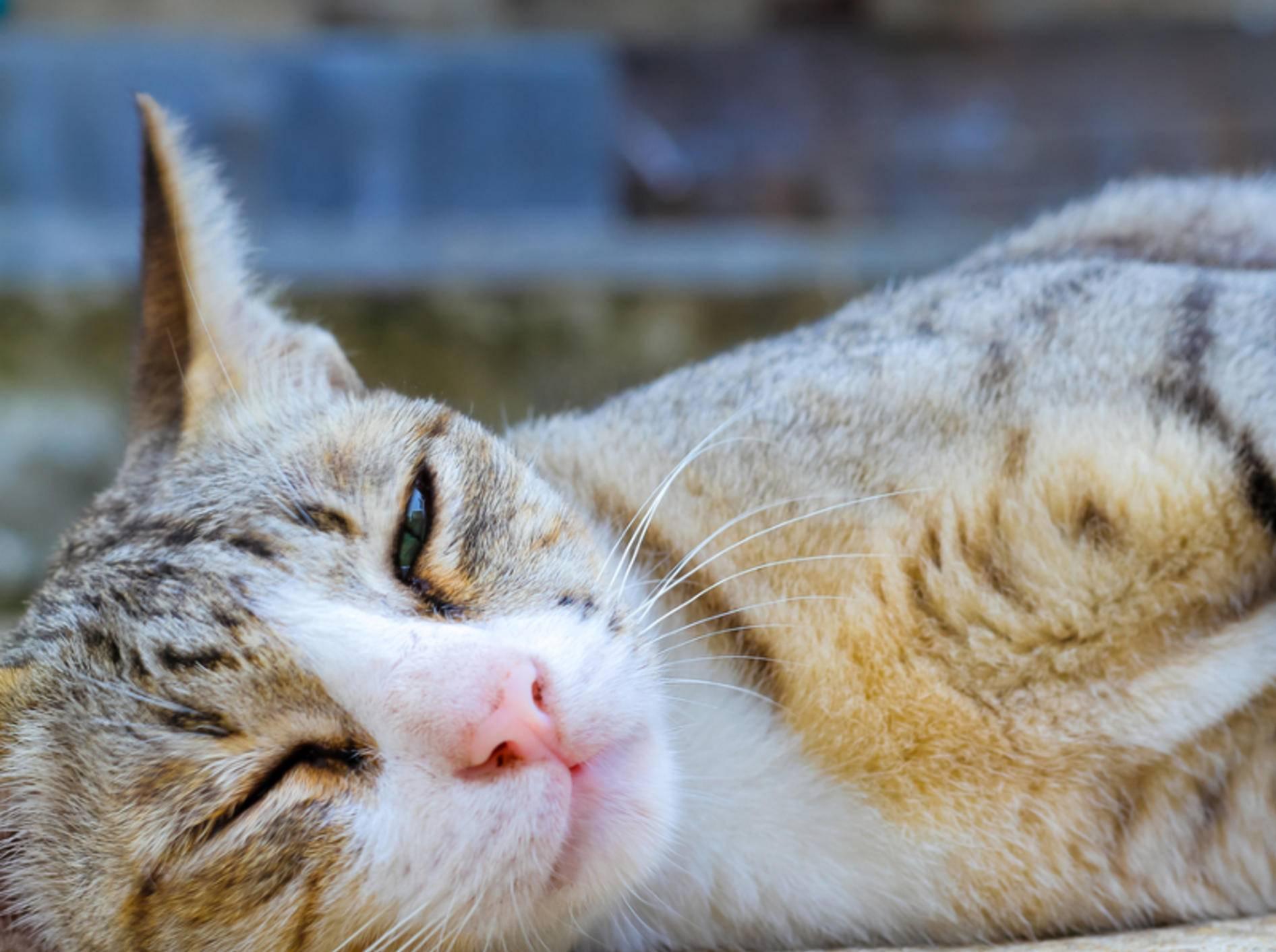 Warum Katzen blinzeln? Um ihrer Sanftmut Ausdruck zu verleihen – Shutterstock / somsak nitimongkolchai