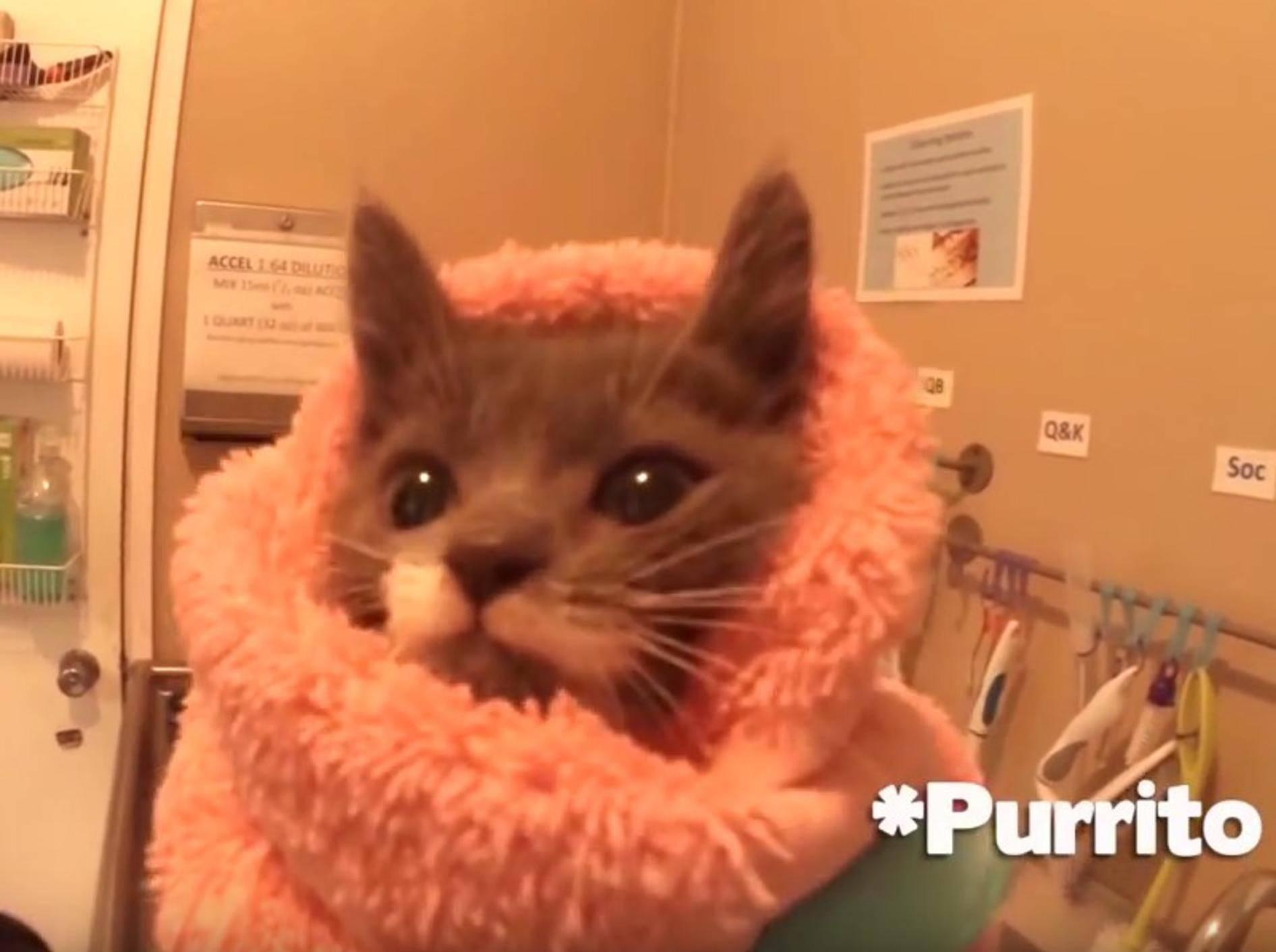 Im Katzenwaisenhaus wird sich gut um die kleinen Racker gekümmert – YouTube / Cole and Marmalade