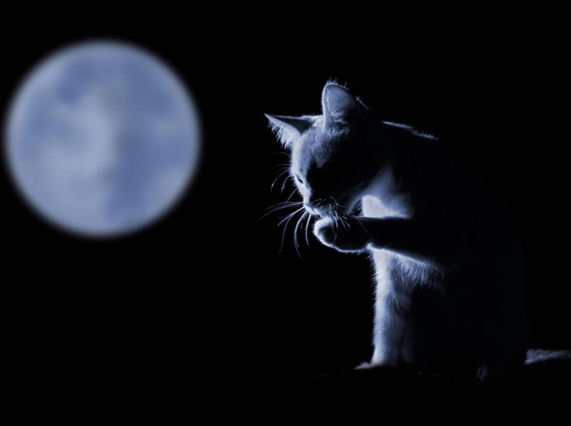 Tatsächlich wirken nachts alle Katzen grau – Shutterstock / Durch Tuzemka