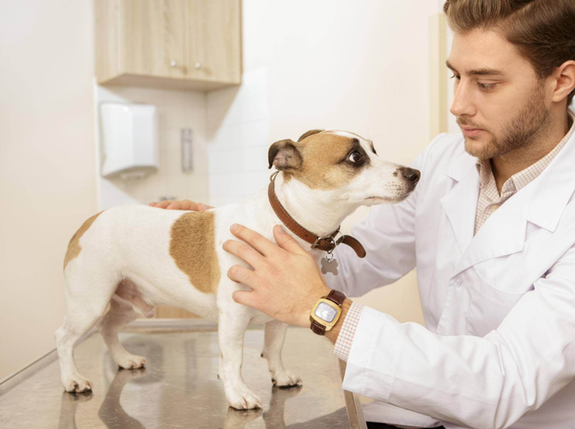 Nach einem Unfall oder Schlag auf den Kopf heißt es: Ab zum Tierarzt! Womöglich hat Ihr Hund eine Gehirnerschütterung – Shutterstock / Nestor Rizhniak