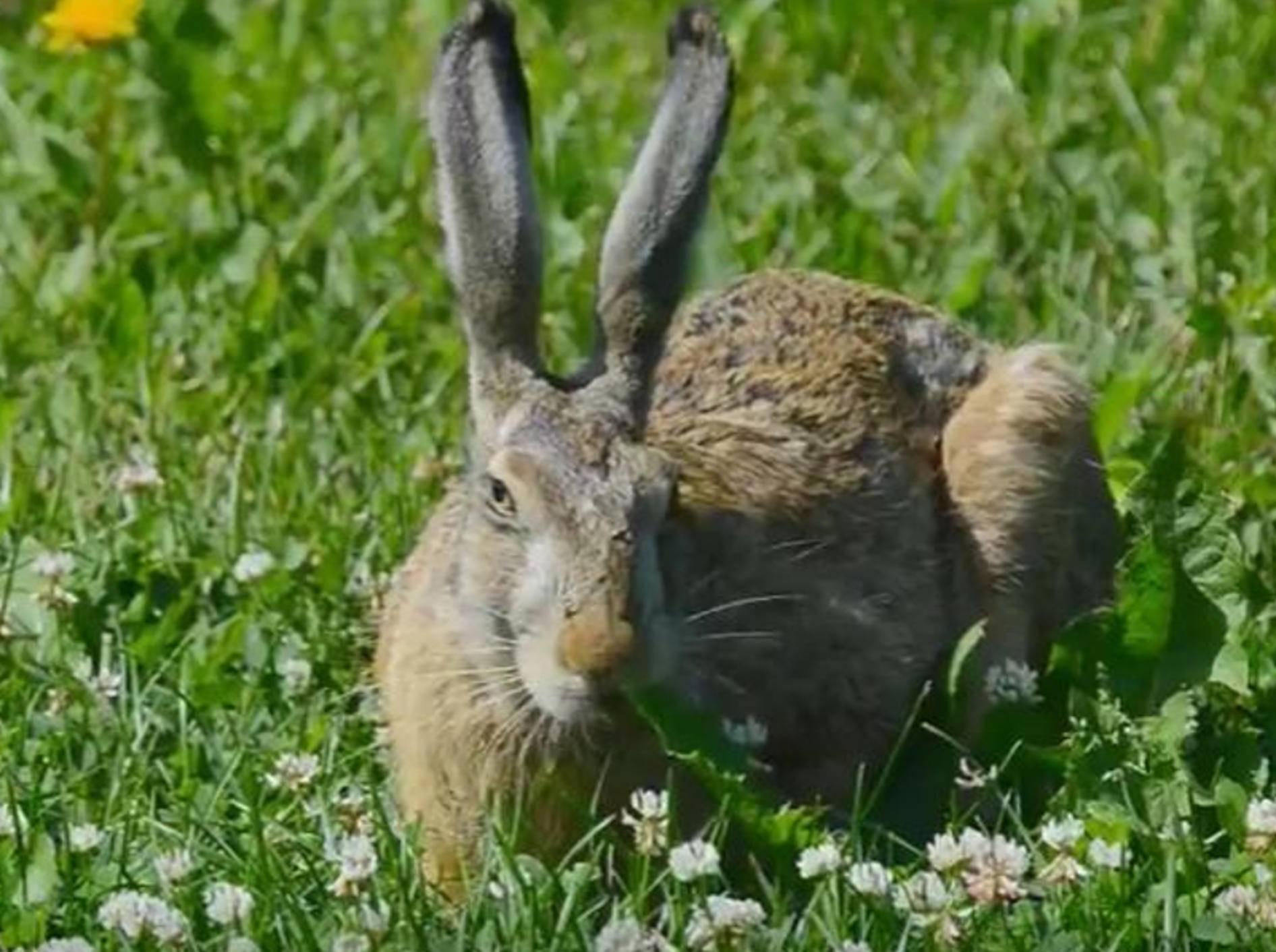 Auch Osterhasen müssen dann und wann ein Päuschen einlegen – youtube / Sven Pirkko