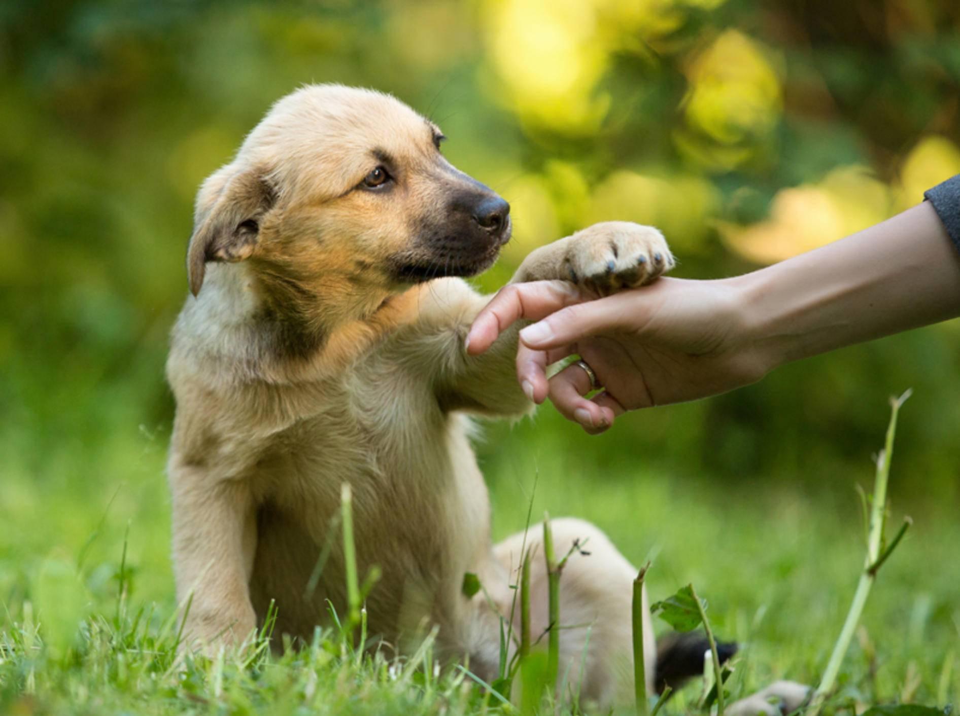 Um Erziehung des Hun ... Von der gewaltfreien Was tu ich nur mit diesem Hund?