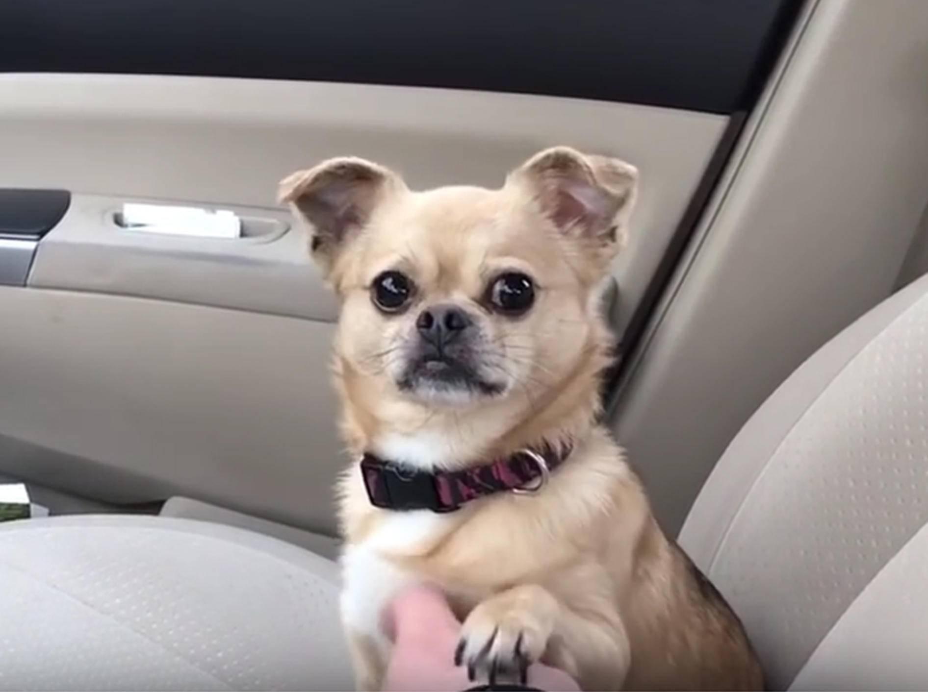 Hundedame Penny will auf keinen Fall zum Tierarzt – YouTube / Rumble Viral