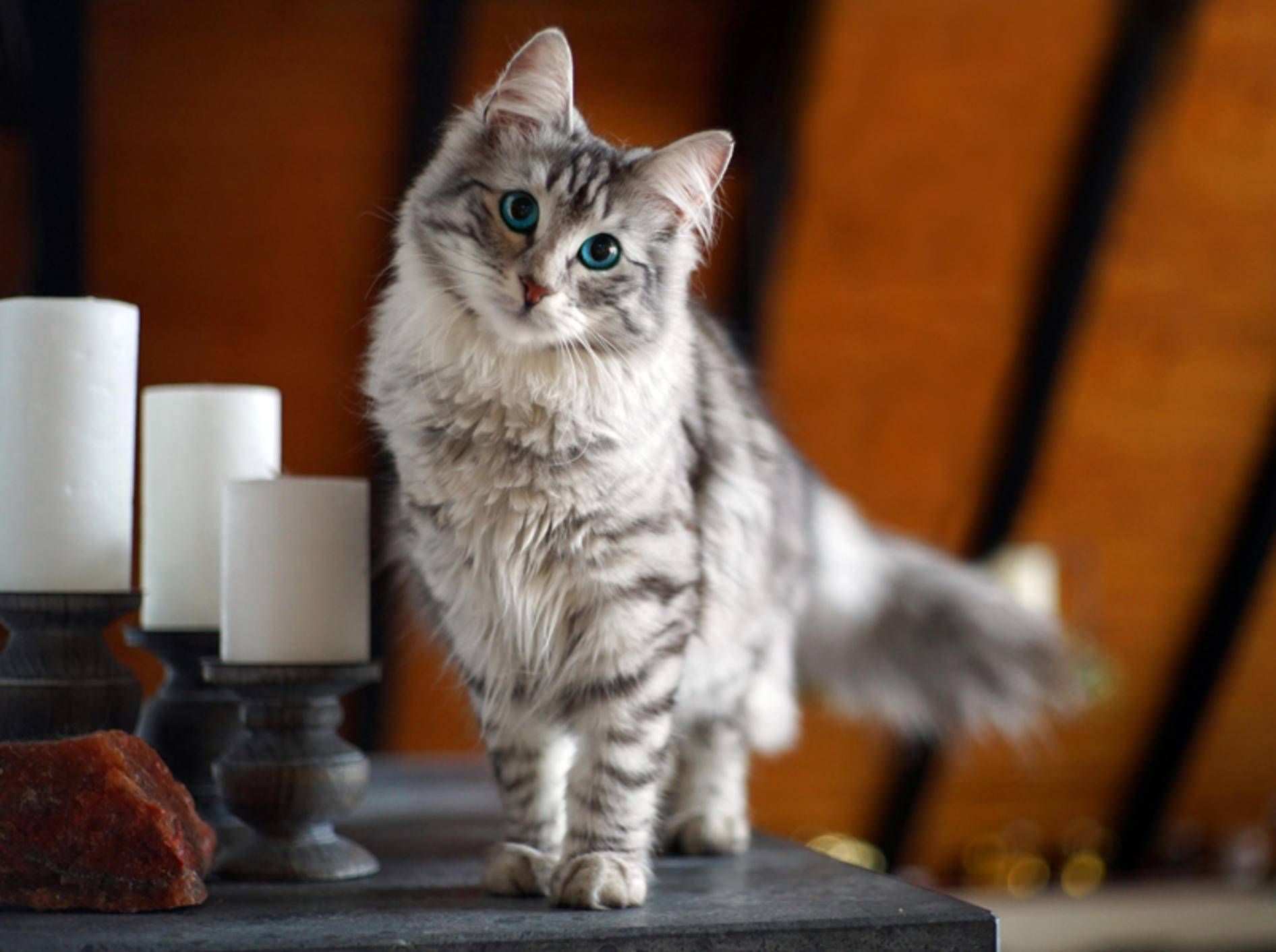 """Nanu? Was ist denn das?"", wundert sich diese neugierige Katze. Ob sie wohl die Kamera meint? – Shutterstock / www.julian.pictures"