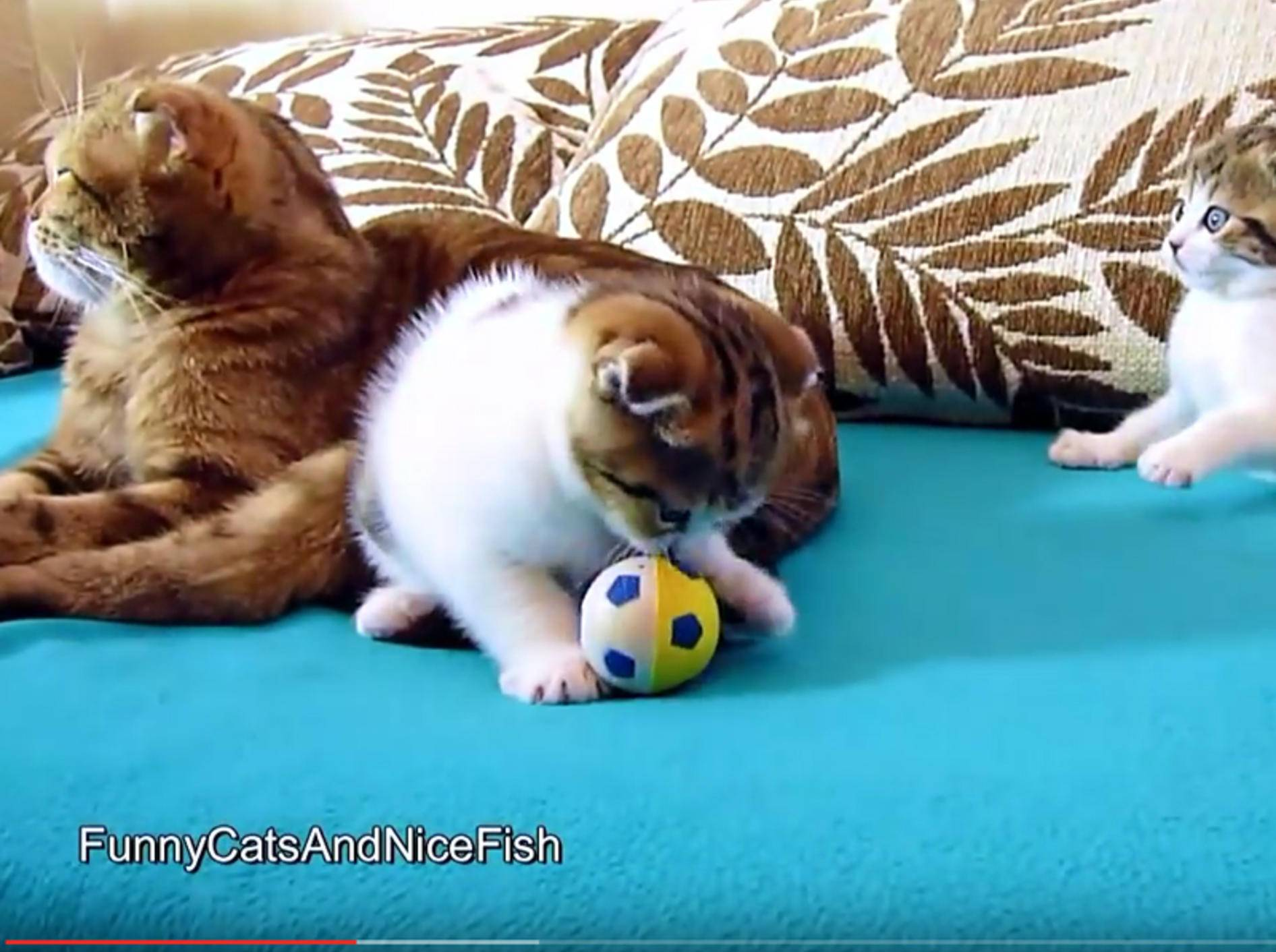 Familienbande: Süße Baby-Katzen und ihre Mama – YouTube / FunnyCatsAndNiceFish