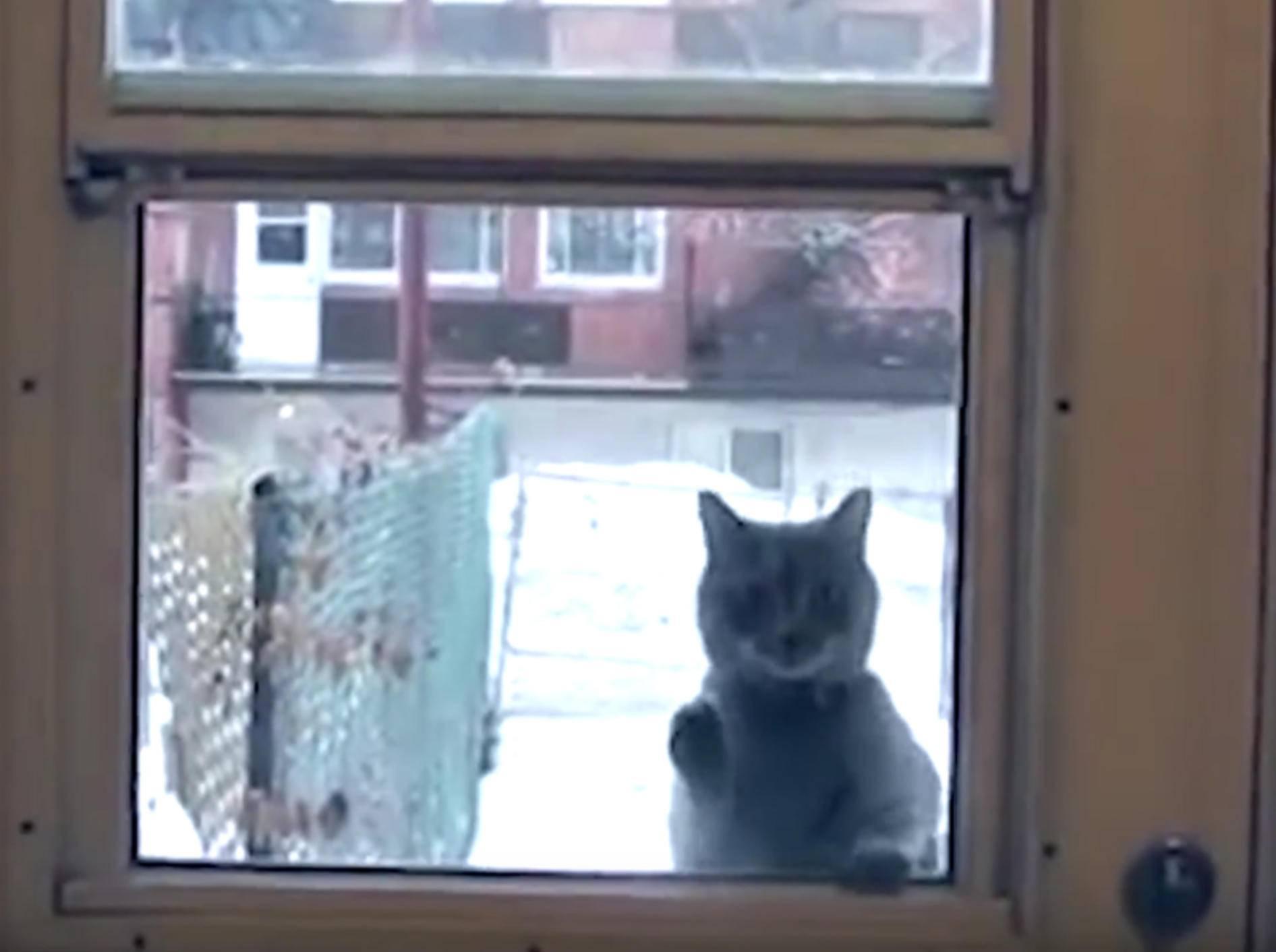Knuffige Katzen wollen unbedingt ins Haus – YouTube / The Dodo
