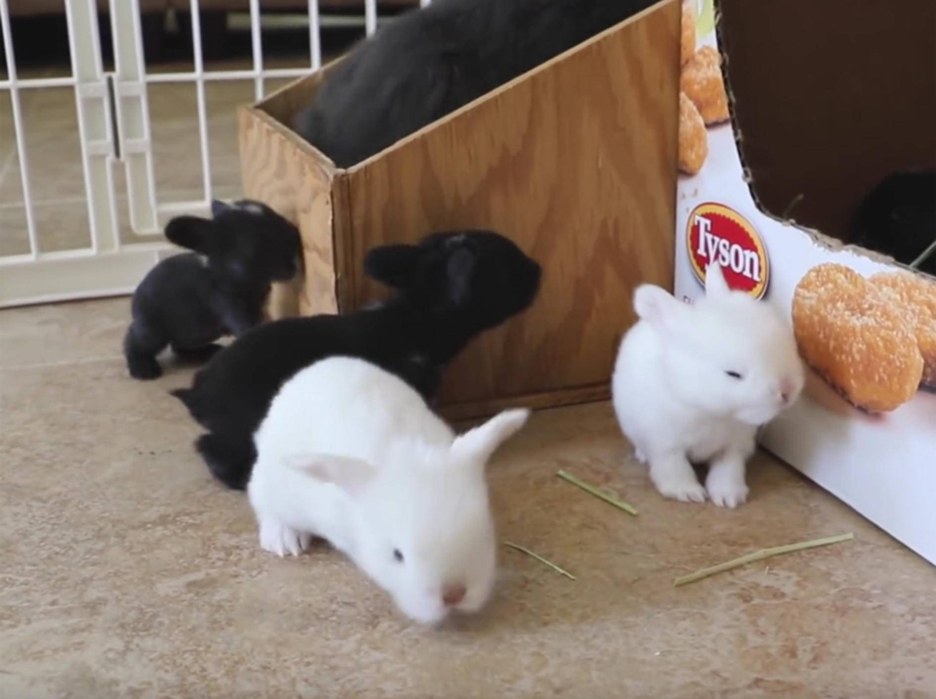 Tapsige Kaninchenbabys hoppeln durch ihren Stall – YouTube / My BB Bunny