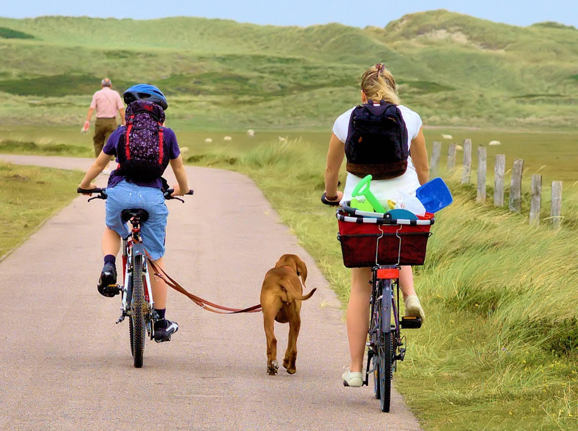 Hund-an-Leine-beim-Fahrradfahren