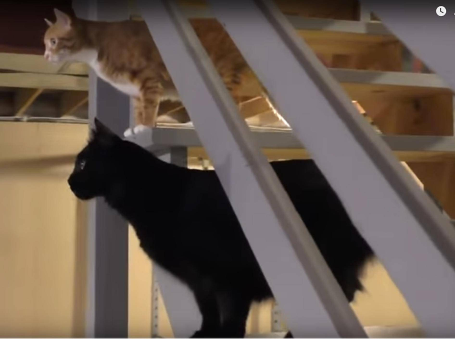 Katzen-Cole-und-Marmelade-im-Keller