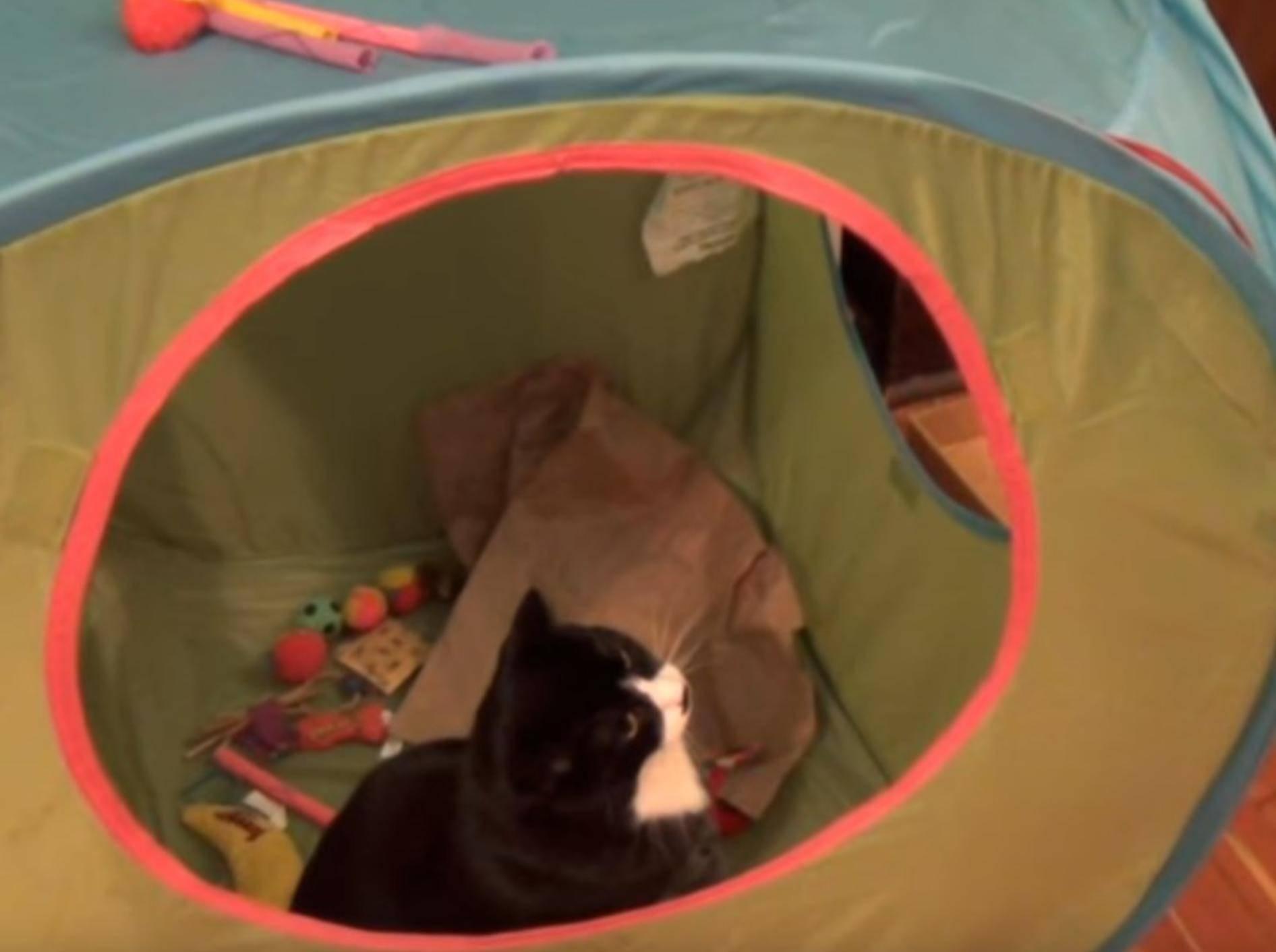 Die Katzen attackieren das Zelt und haben sichtlich Spaß daran - YuoTube / The Kids Cats