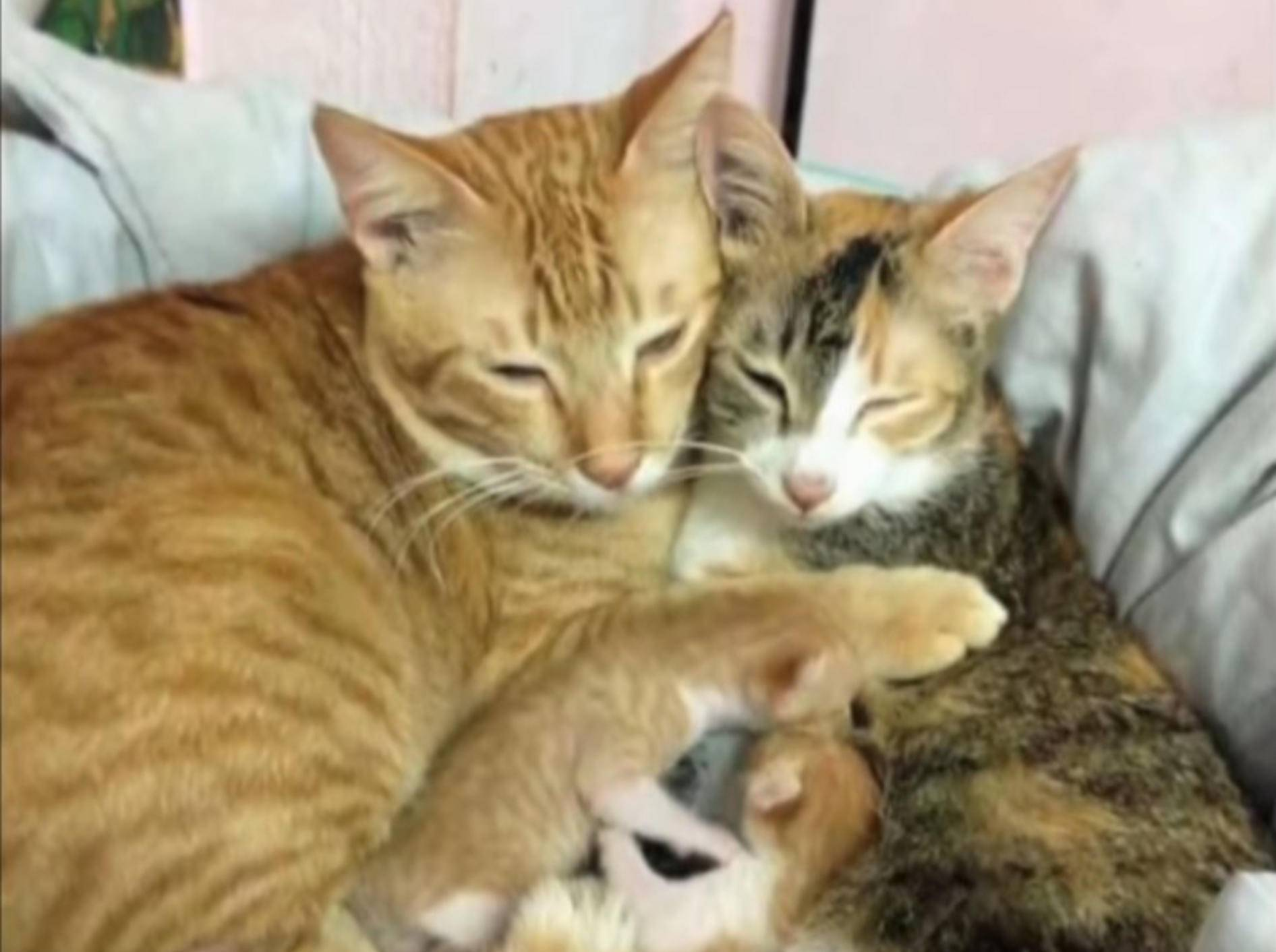 Familienoberhaupt Yello schmusst mit Katzenmama Tam und seinem Nachwuchs – YouTube / Slideshow ForFun