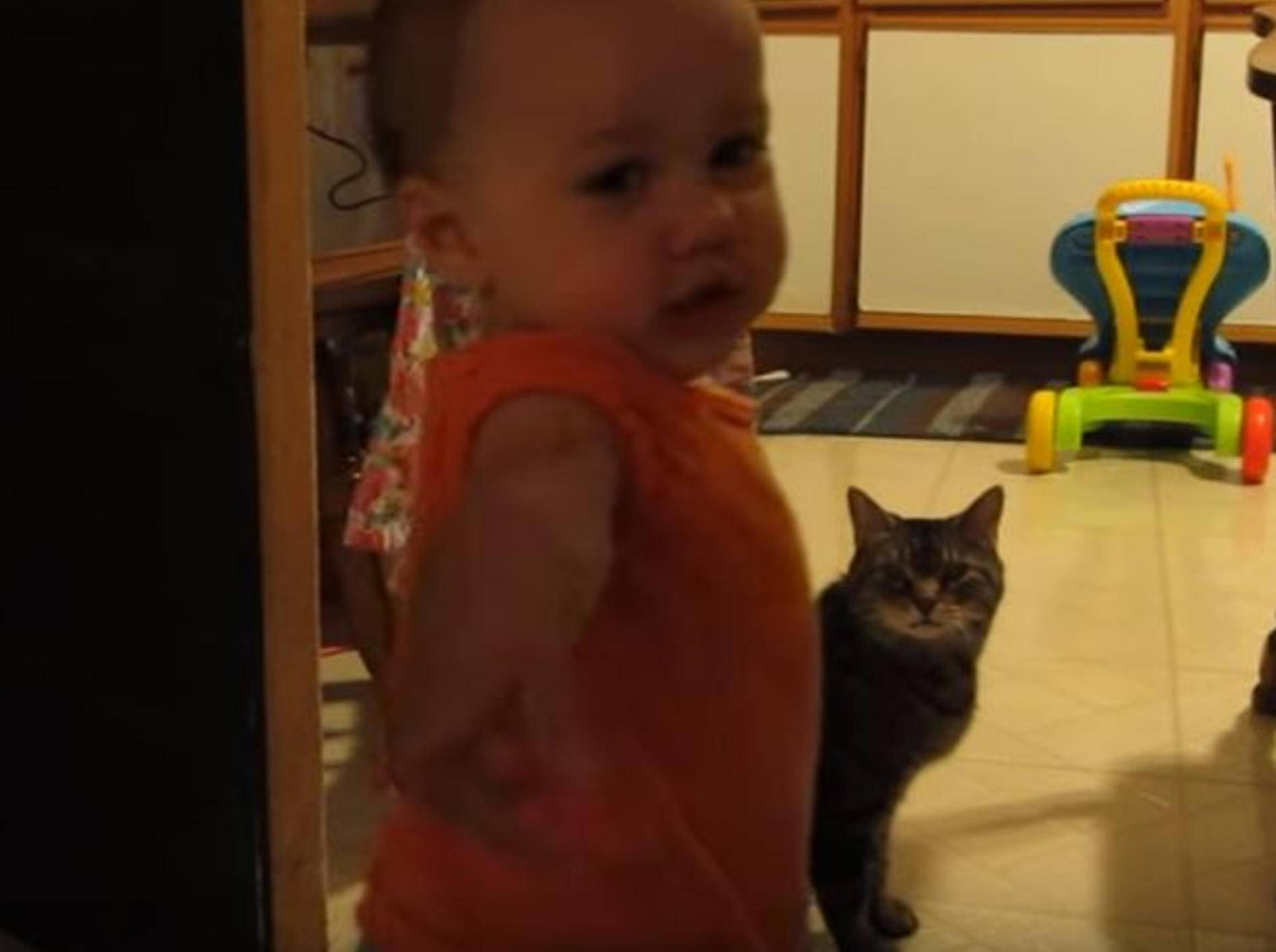 Natürlich kann ich mit Katzen reden! – YouTube / Lenny