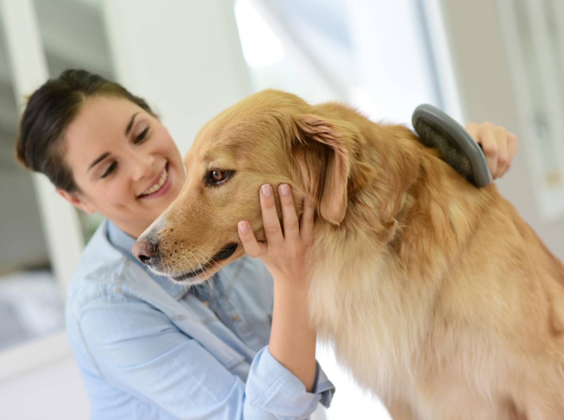 Wenn Ihr Hund Schuppen hat, gibt es verschiedene Methoden zur Behandlung. Eine davon: Bürsten, Bürsten, Bürsten.