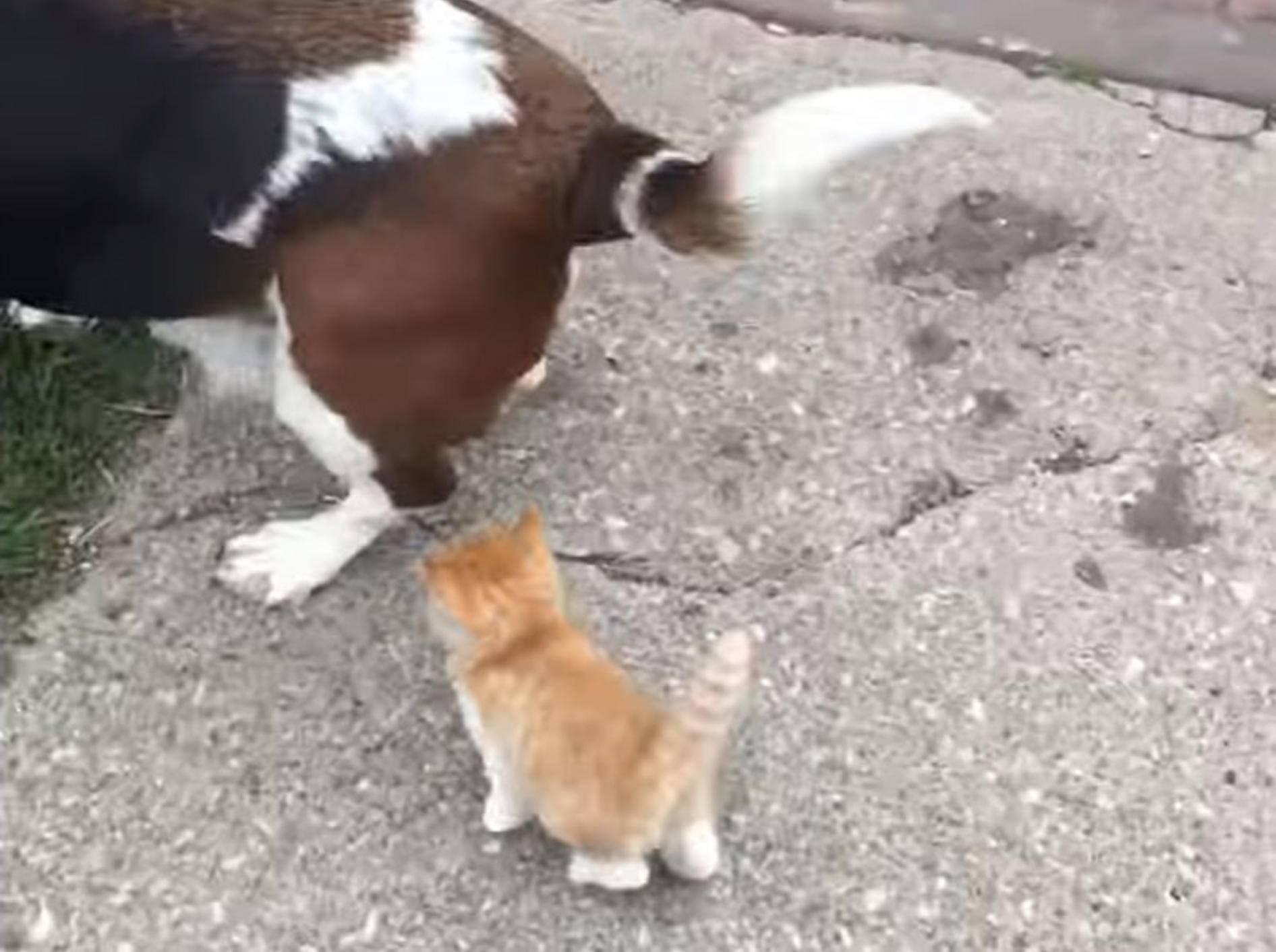 """""""Darf ich bitte mitkommen?"""" Babykatze sucht neues Zuhause – YouTube / ClevelandKitty"""