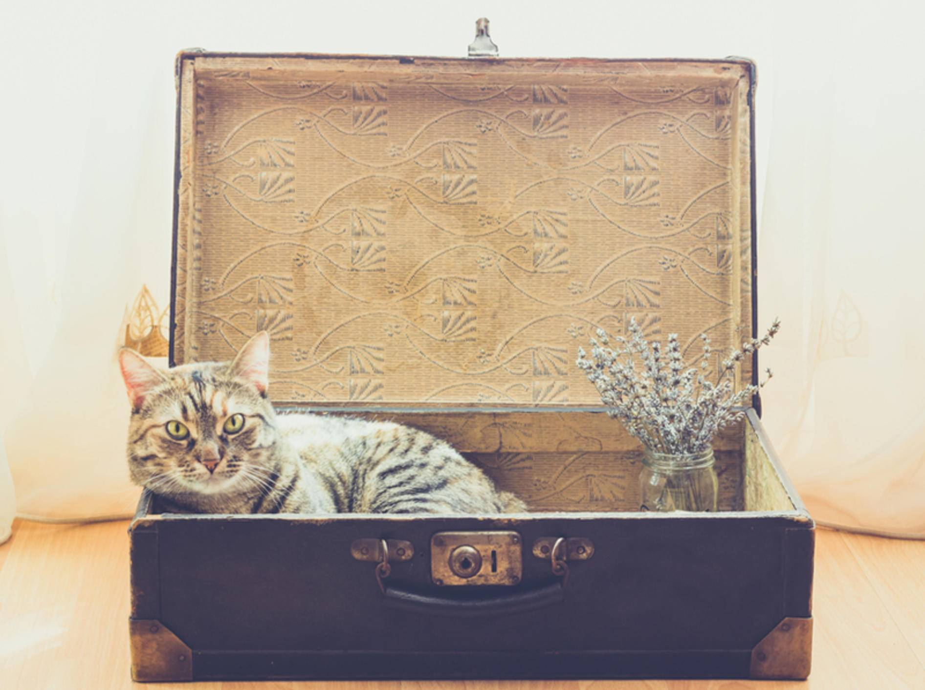 Mit den richtigen Tipps kann der Umzug auch für Ihre Katze stressfrei verlaufen – Shutterstock / Mi Ha