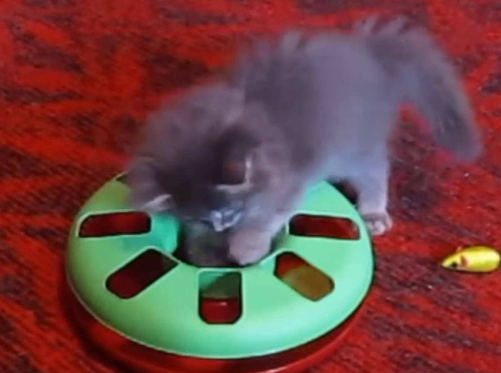 Nanu-wo-ist-der-Ball-Kitten