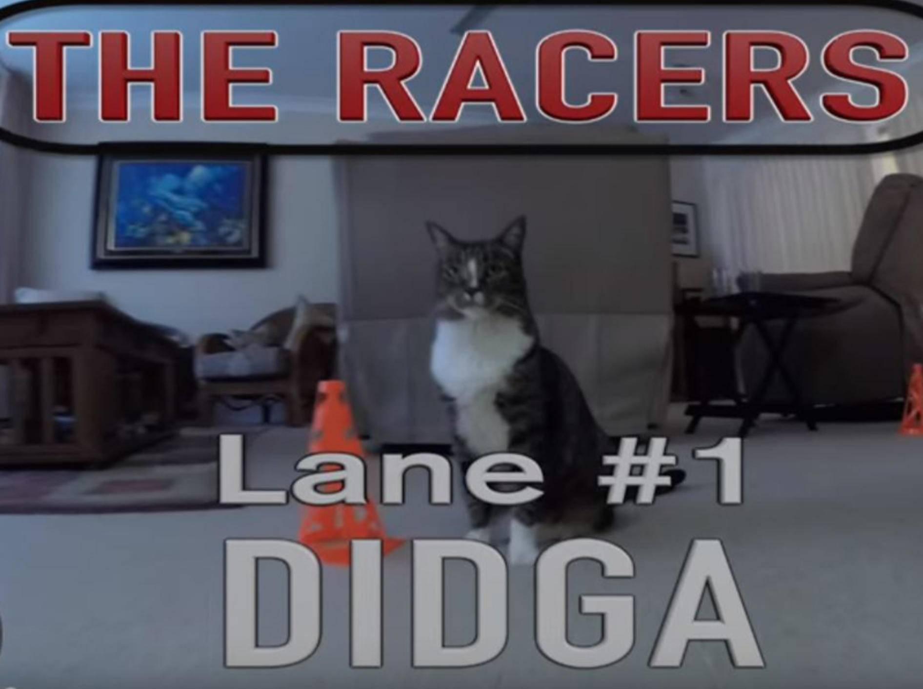 Wettlauf Didga und Boomer YouTube CATMANTOO