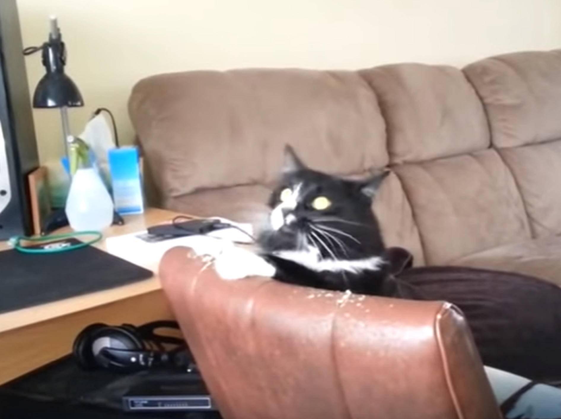 Lustige Katze beim Headbangen - YouTube Rumble Viral