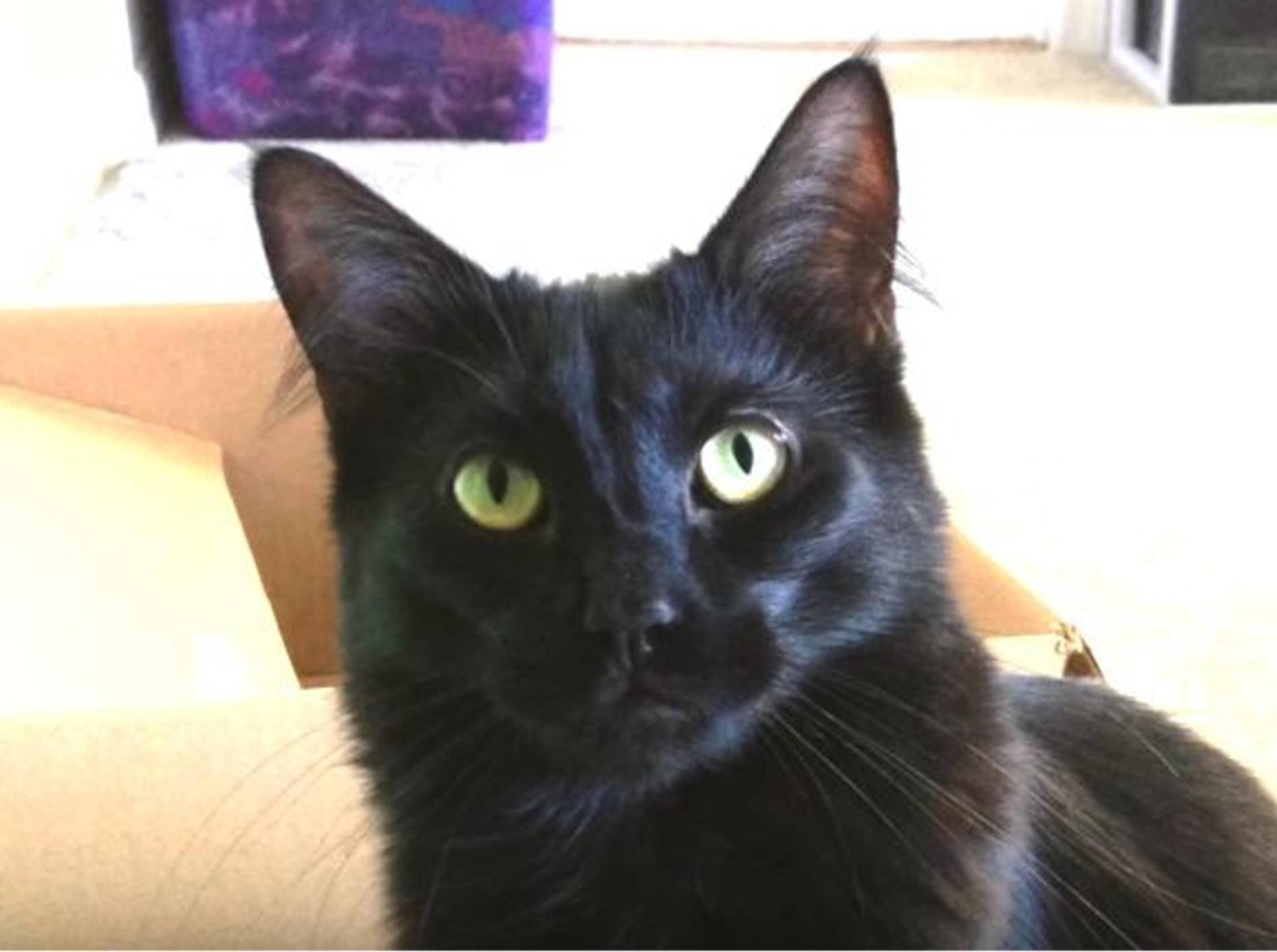 Schwarze Katzen bringen Unglück? Von wegen! – YouTube / Cole and Marmalade