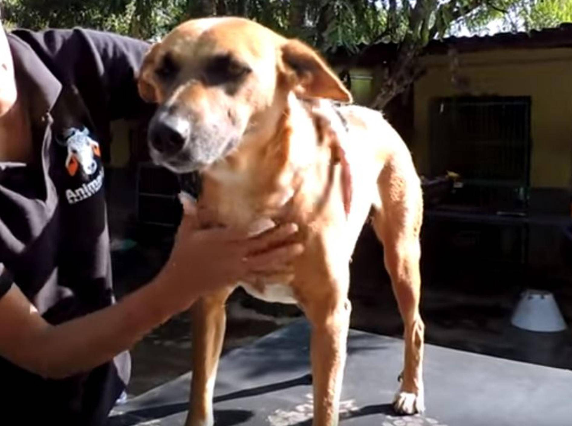 Dieser süße Hund aus Indien überlebt dank dem Mut und Engagement seiner zweibeinigen Retter – YouTube / Animal Aid Unlimited India