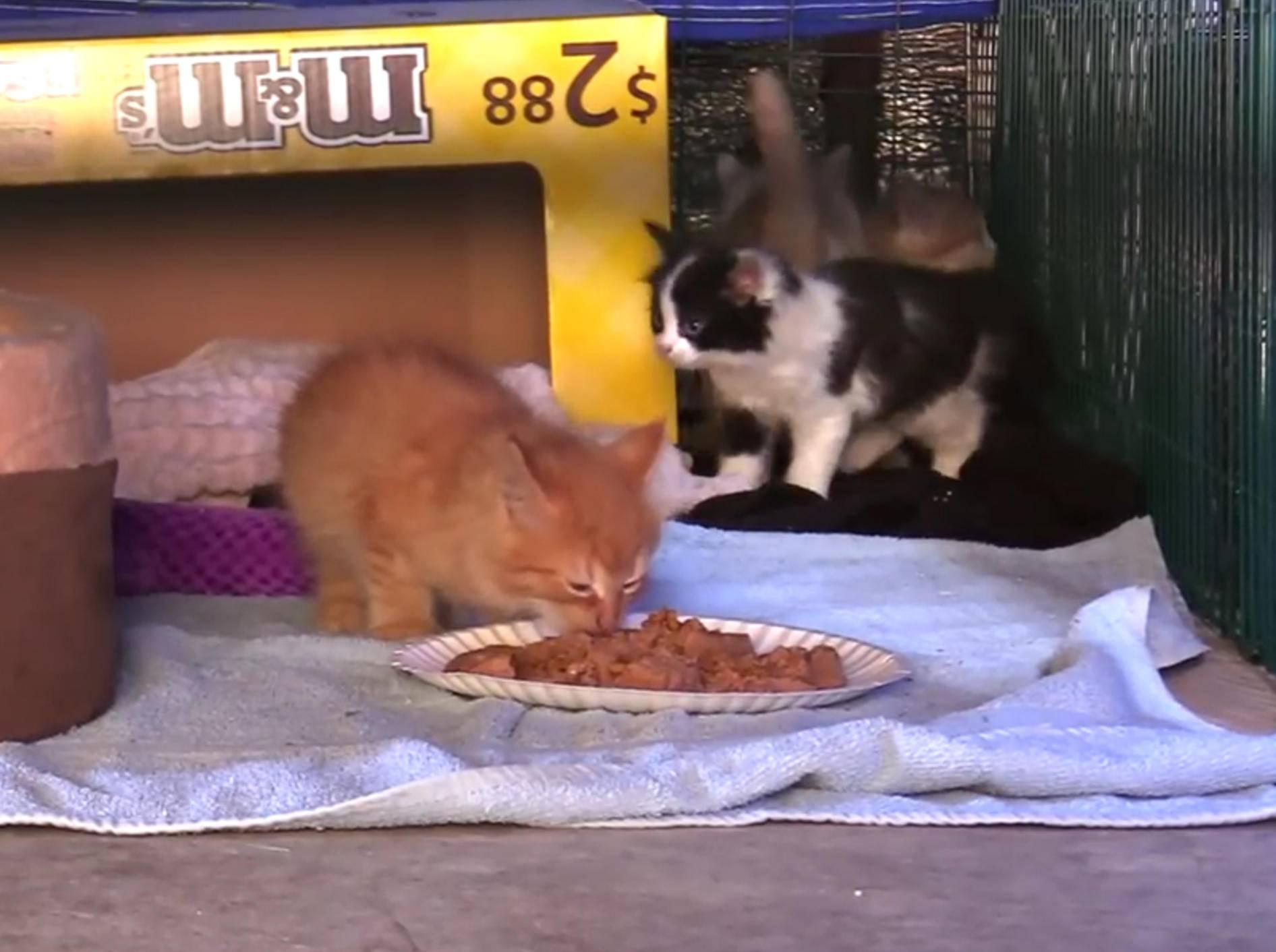 Gerettete Findelkätzchen versuchen auszubüxen – YouTube / Cat Man Chris