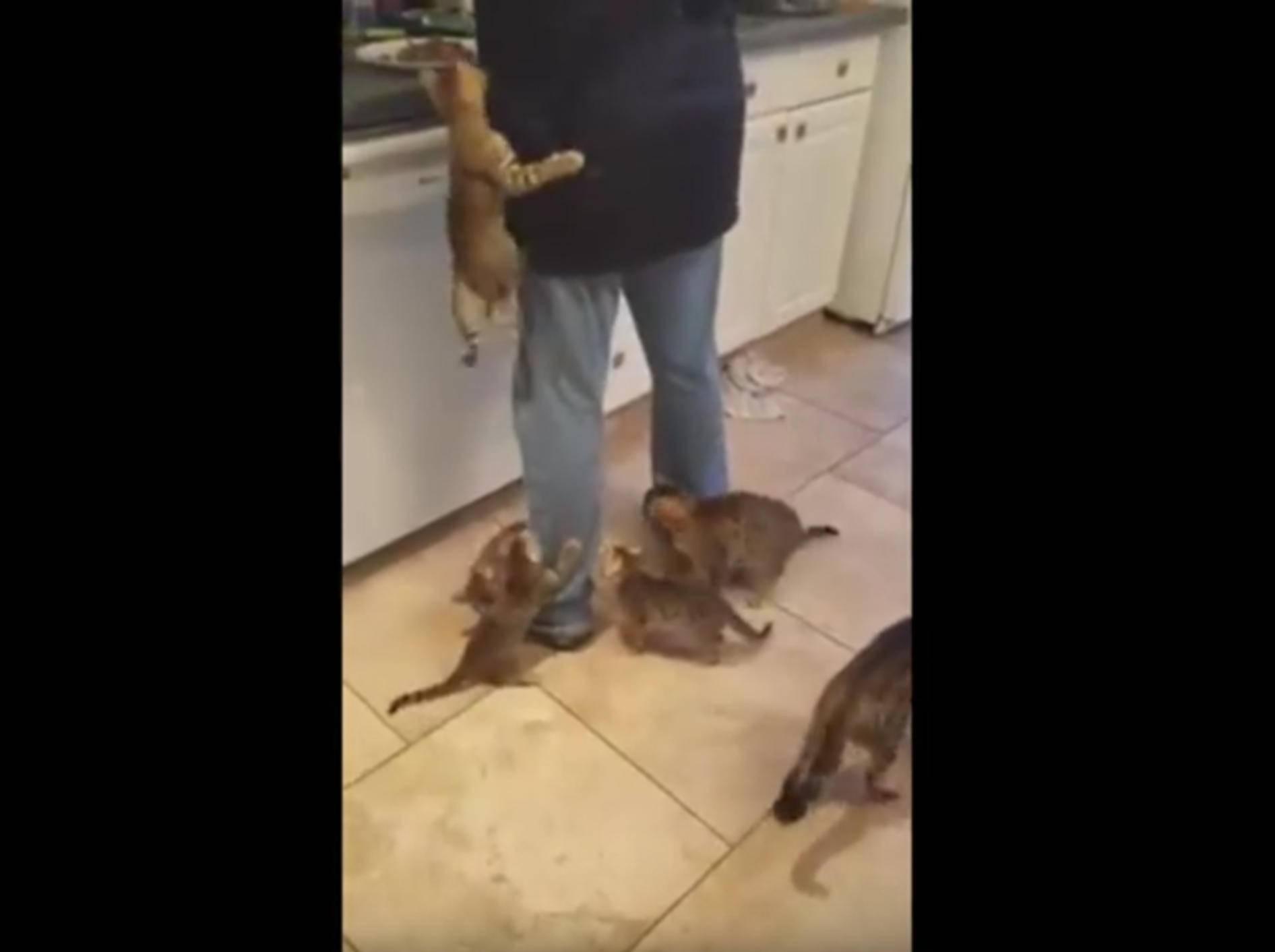 Essen fassen! Hungrige Kätzchen sind nicht zu stoppen – YouTube / Rumble Viral